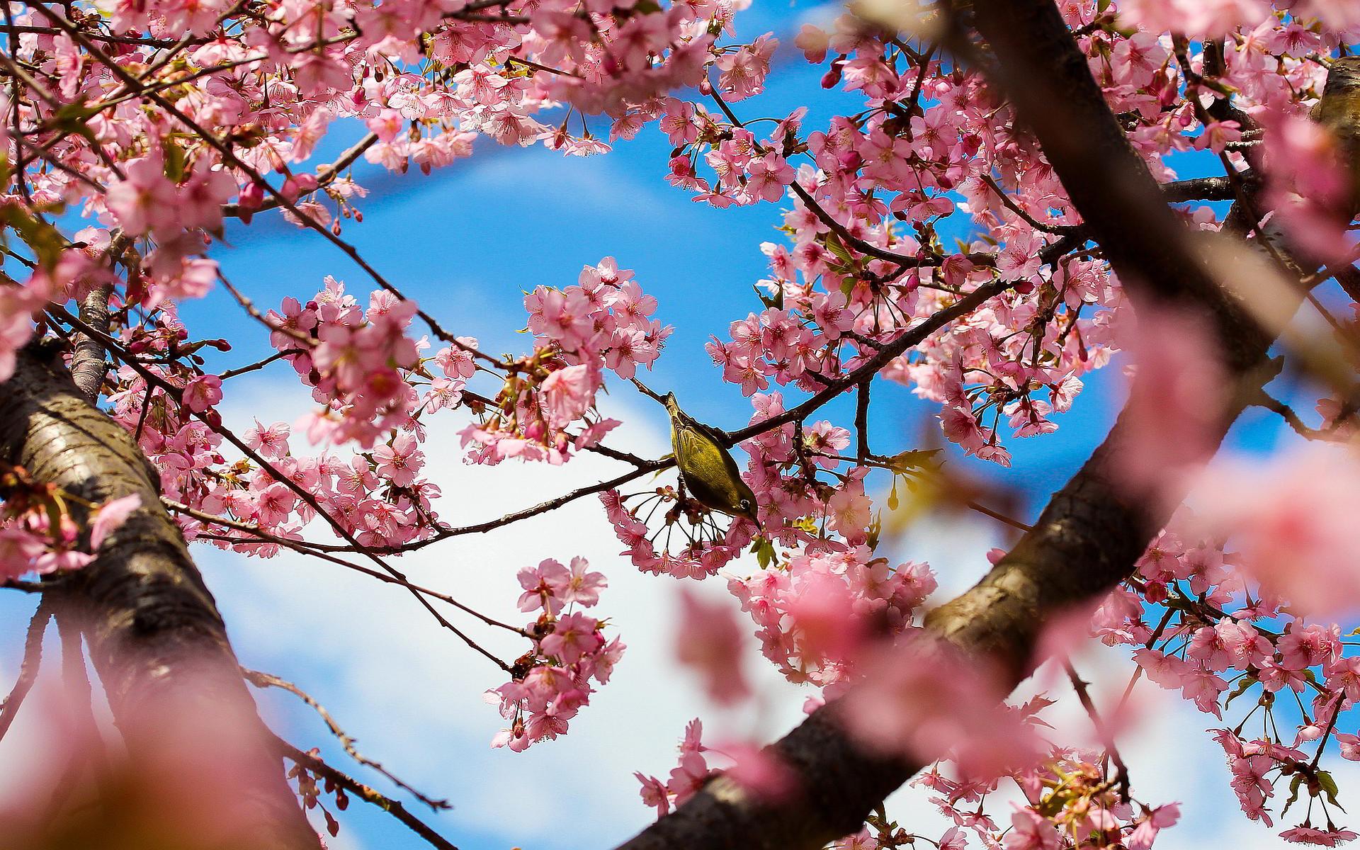 Spring desktop wallpapers backgrounds 65 images - Free computer backgrounds for spring ...