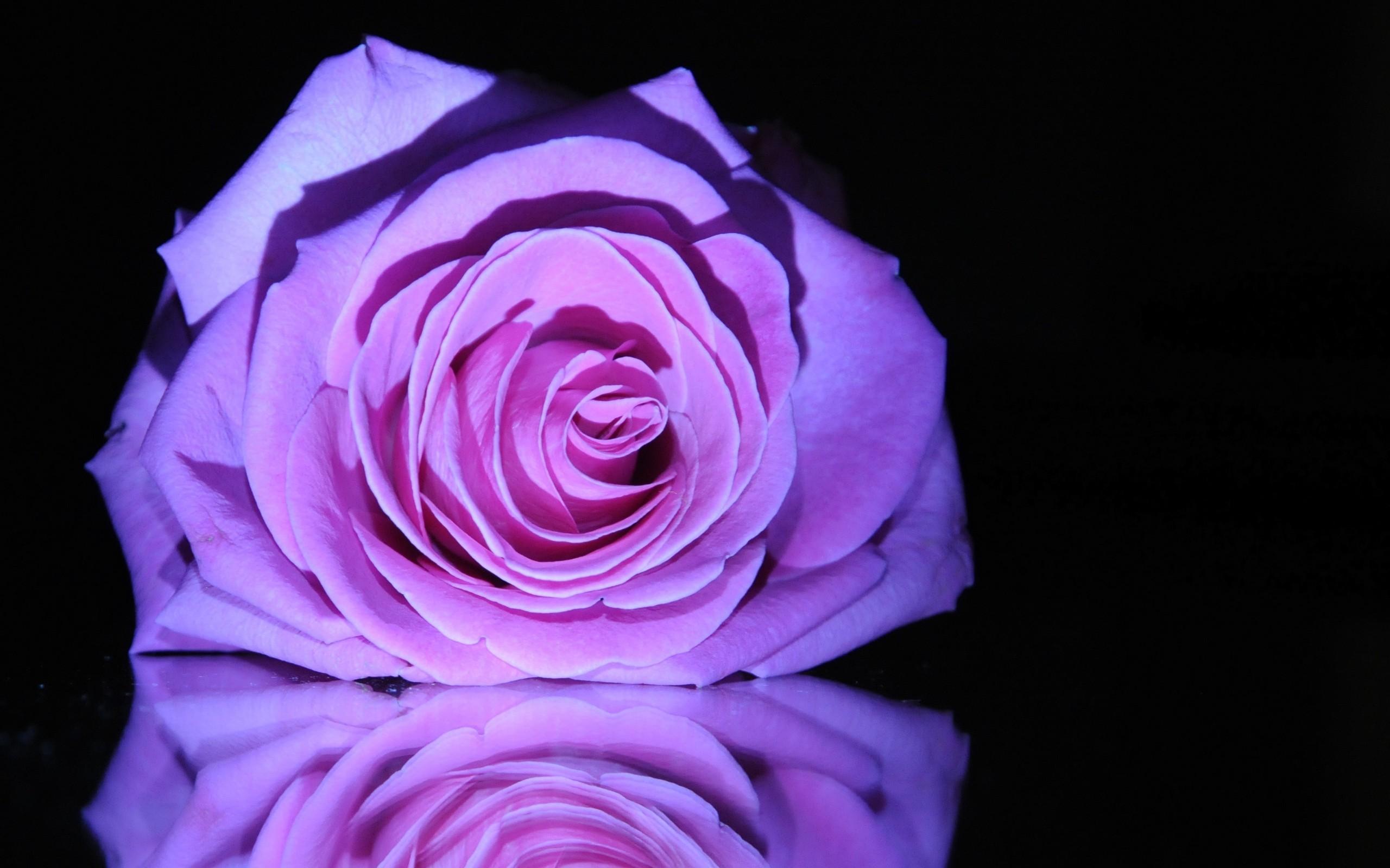 Purple Love Wallpaper: Purple Love Wallpaper (51+ Images