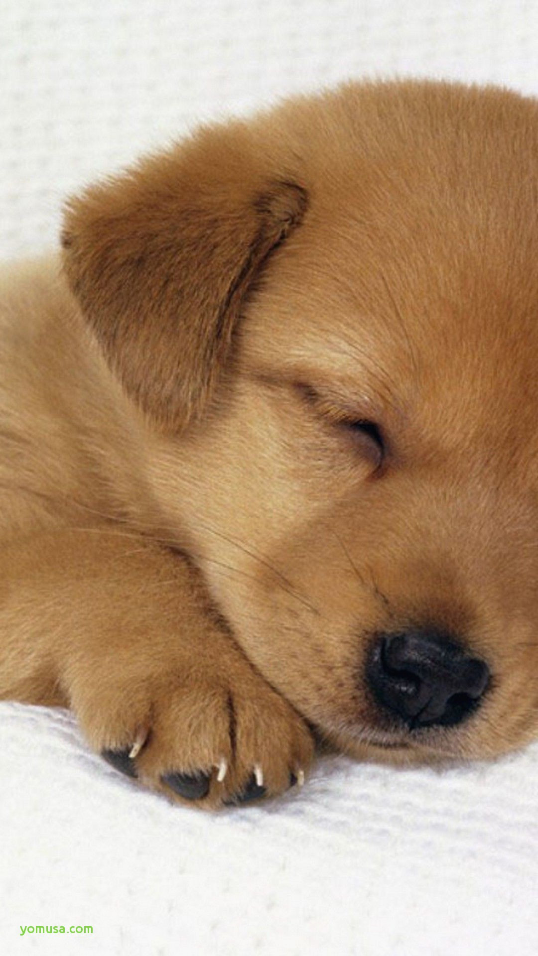 . Dachshund Puppies Wallpaper  68  images