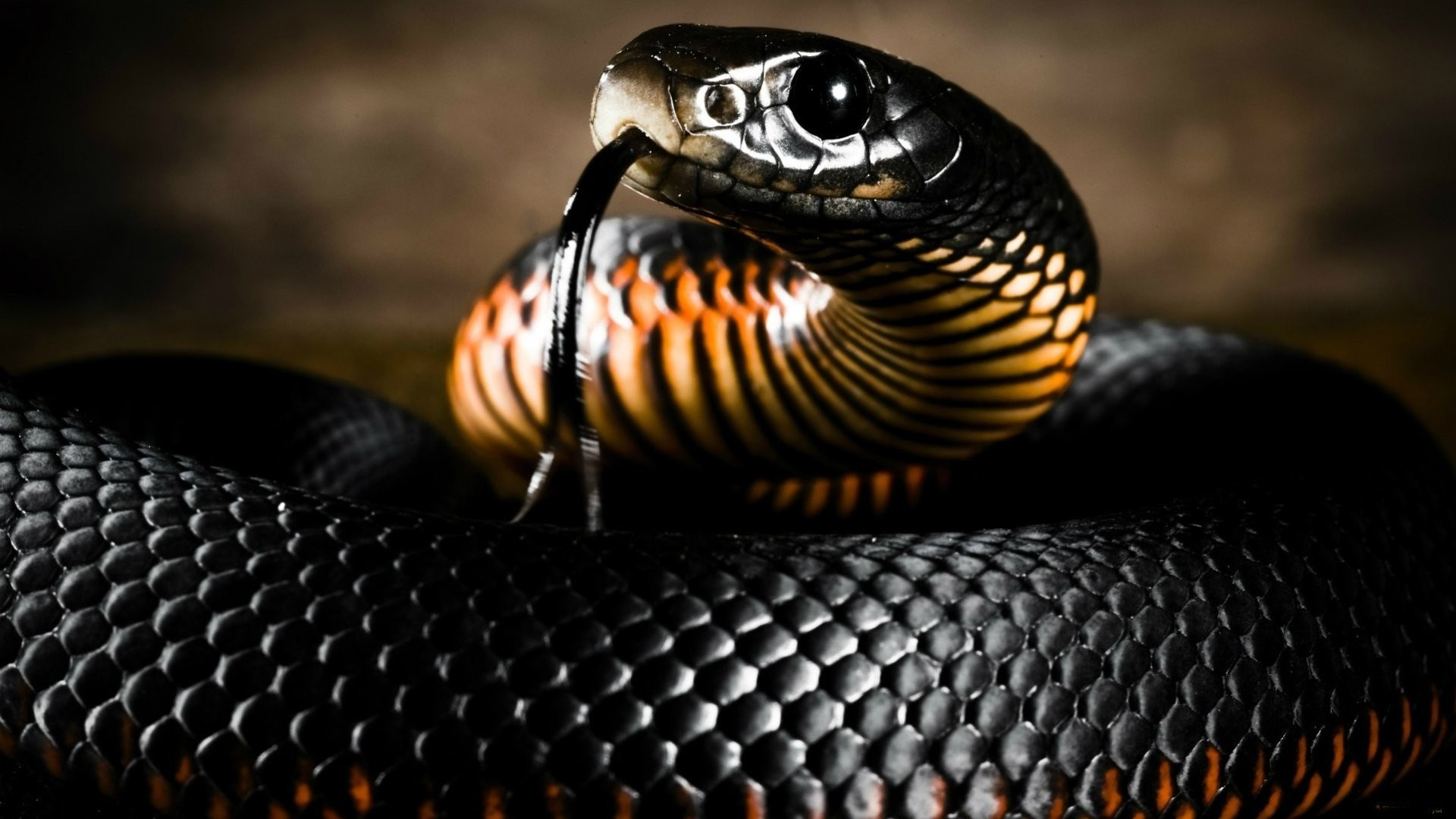cool snake backgrounds 70 images