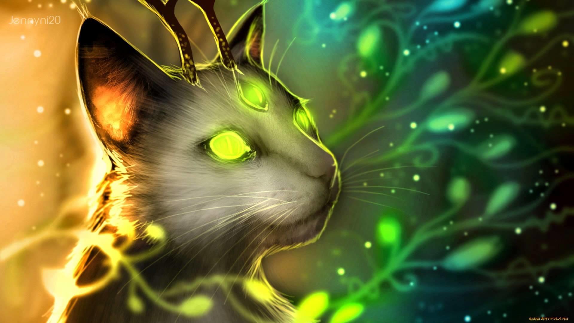 Epic Cat Wallpaper 73 Images