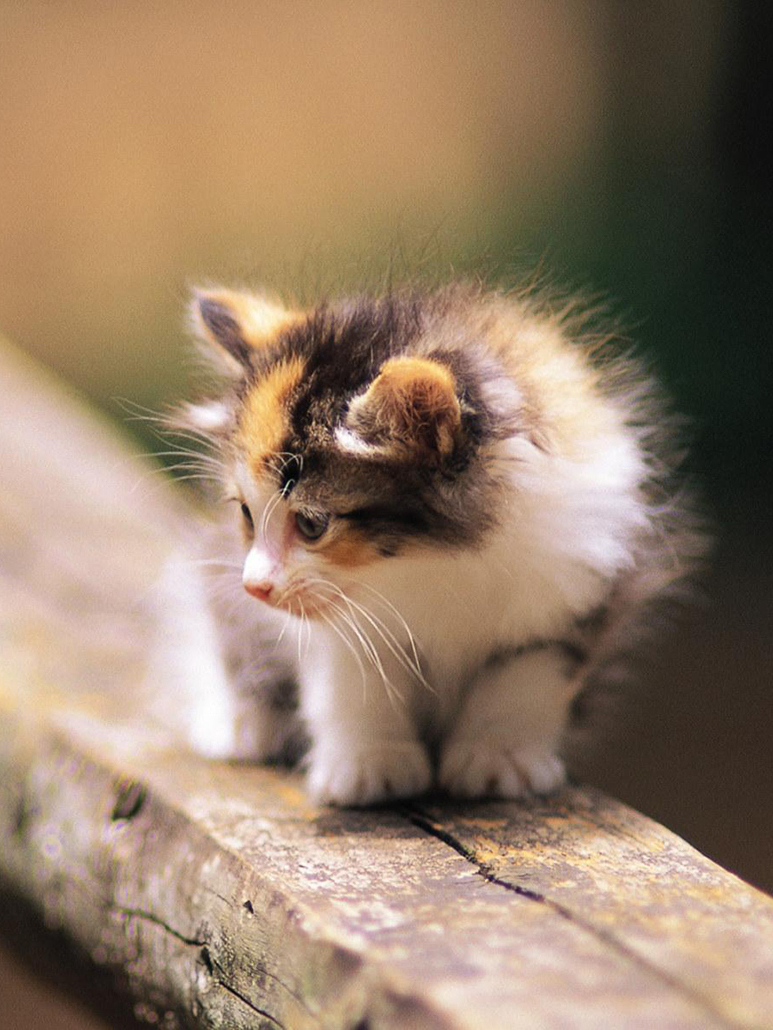 Kitten wallpapers 68 images - Cool backgrounds of cats ...