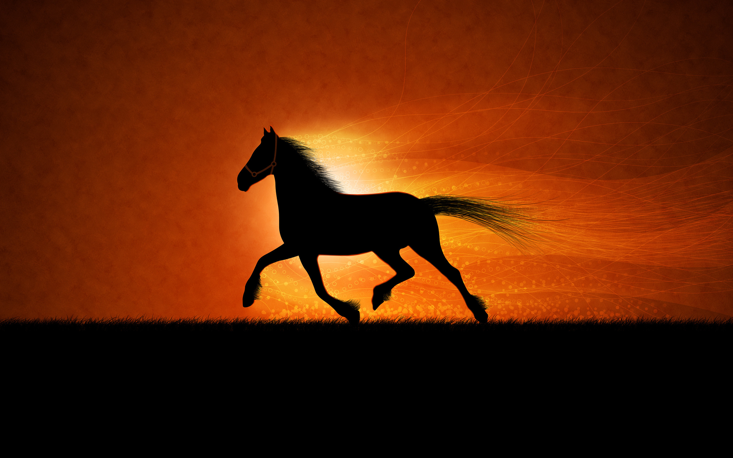 2560x1600 0 horse wallpaper hd horse wallpaper hd