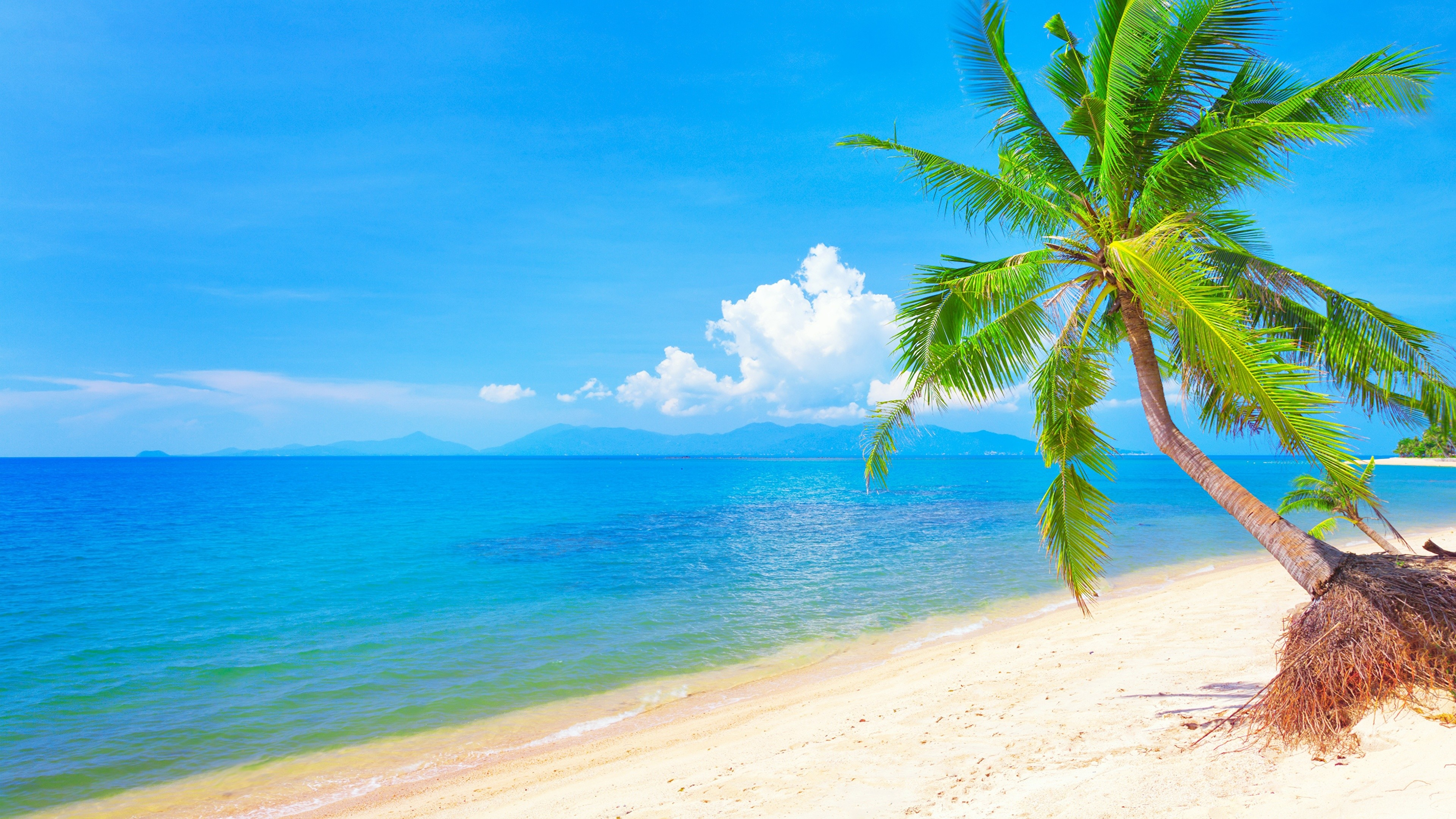 3840x2160 Palm Tree, Shore, Vacation, Accommodation, Caribbean Wallpaper in   Resolution