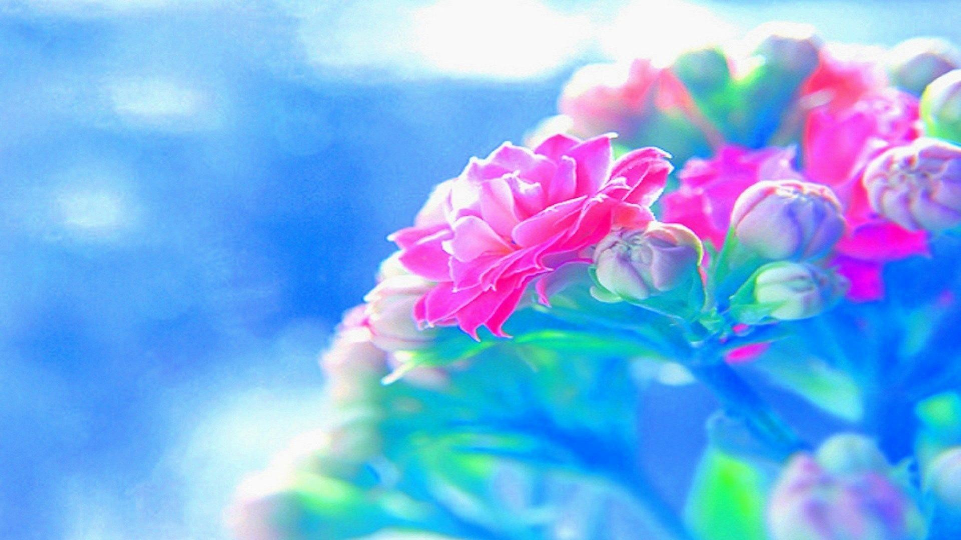 bright flower wallpaper (43+ images)