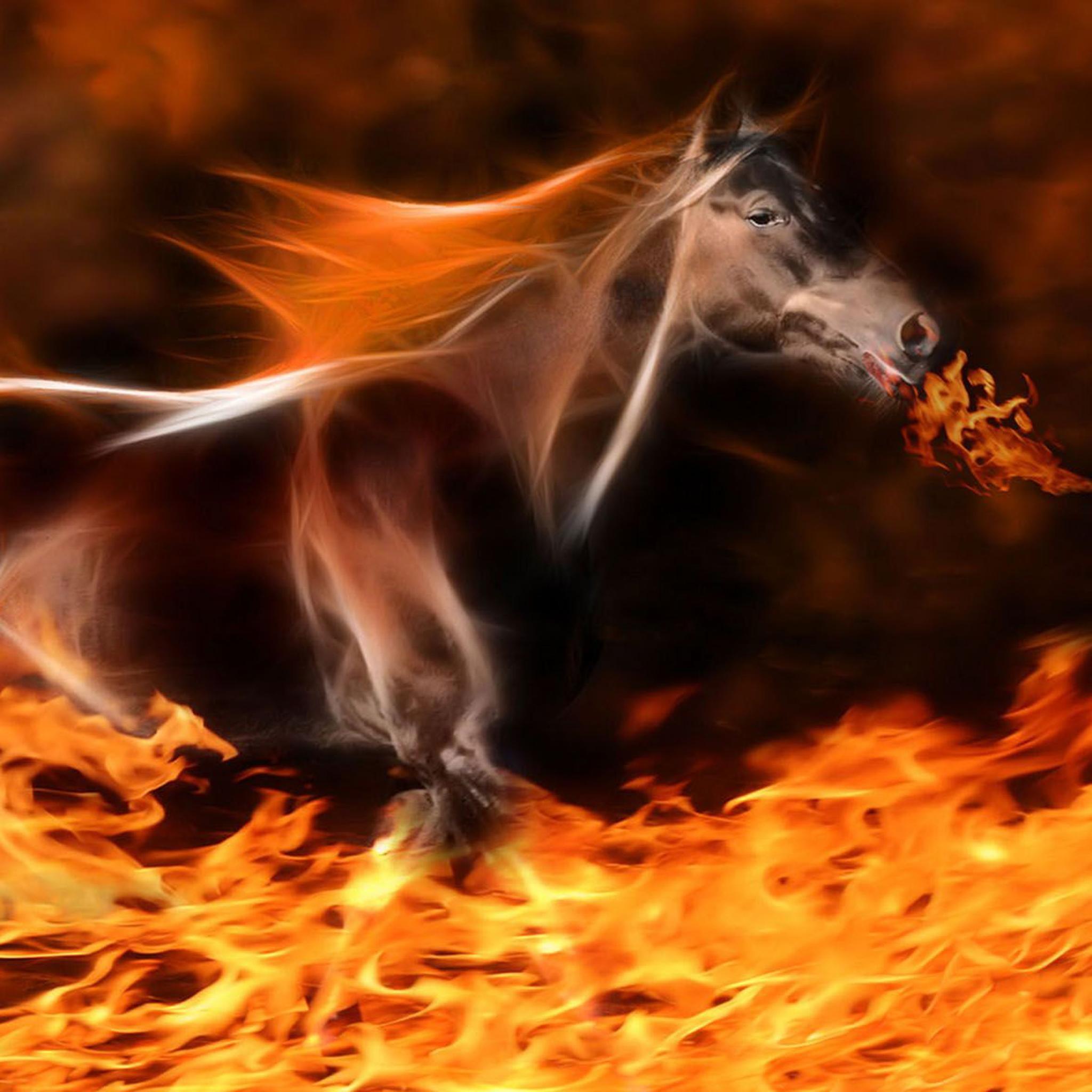 Fire Horse Wallpaper Hd 61 Images