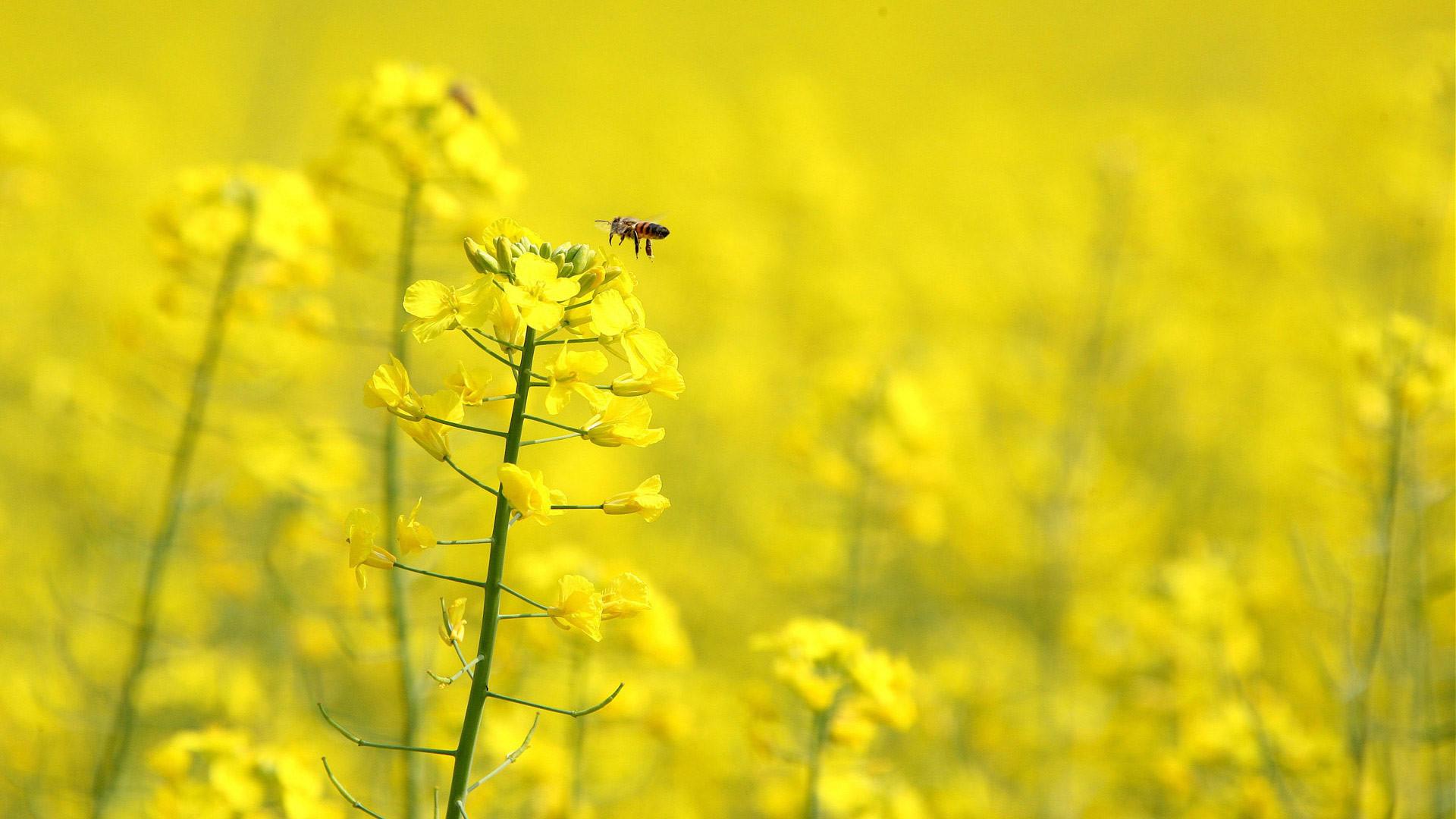 2628x1951 Yellow Flower Wallpaper HD