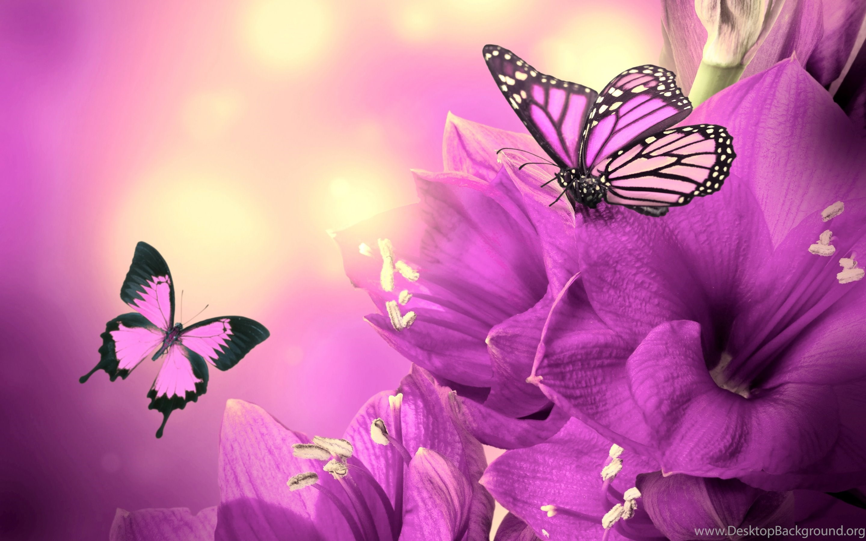 2880x1800 Purple Butterfly Wallpapers 7032 HD Wallpapers Site