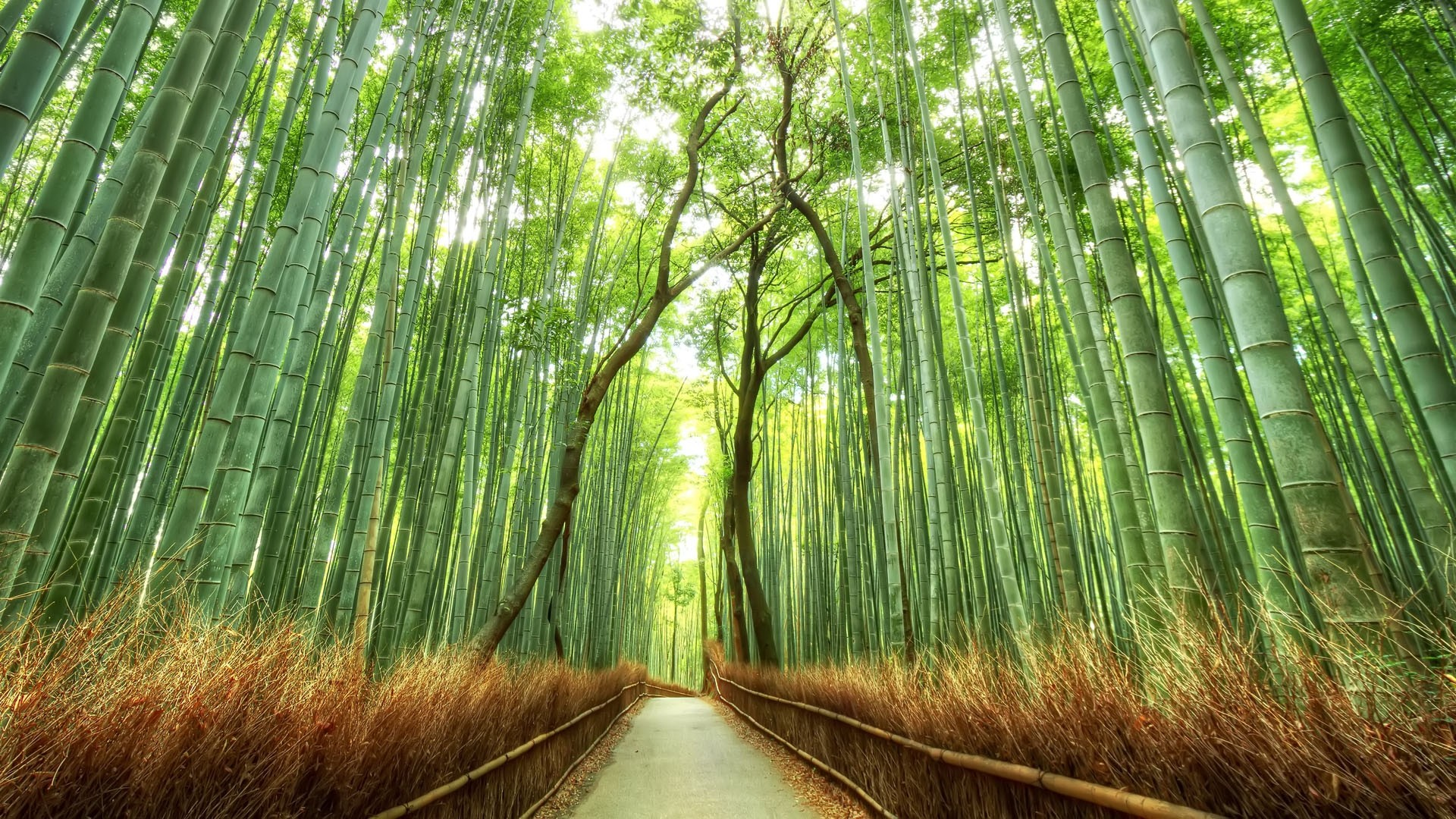 bamboo forest japan computer wallpaper (51+ images)