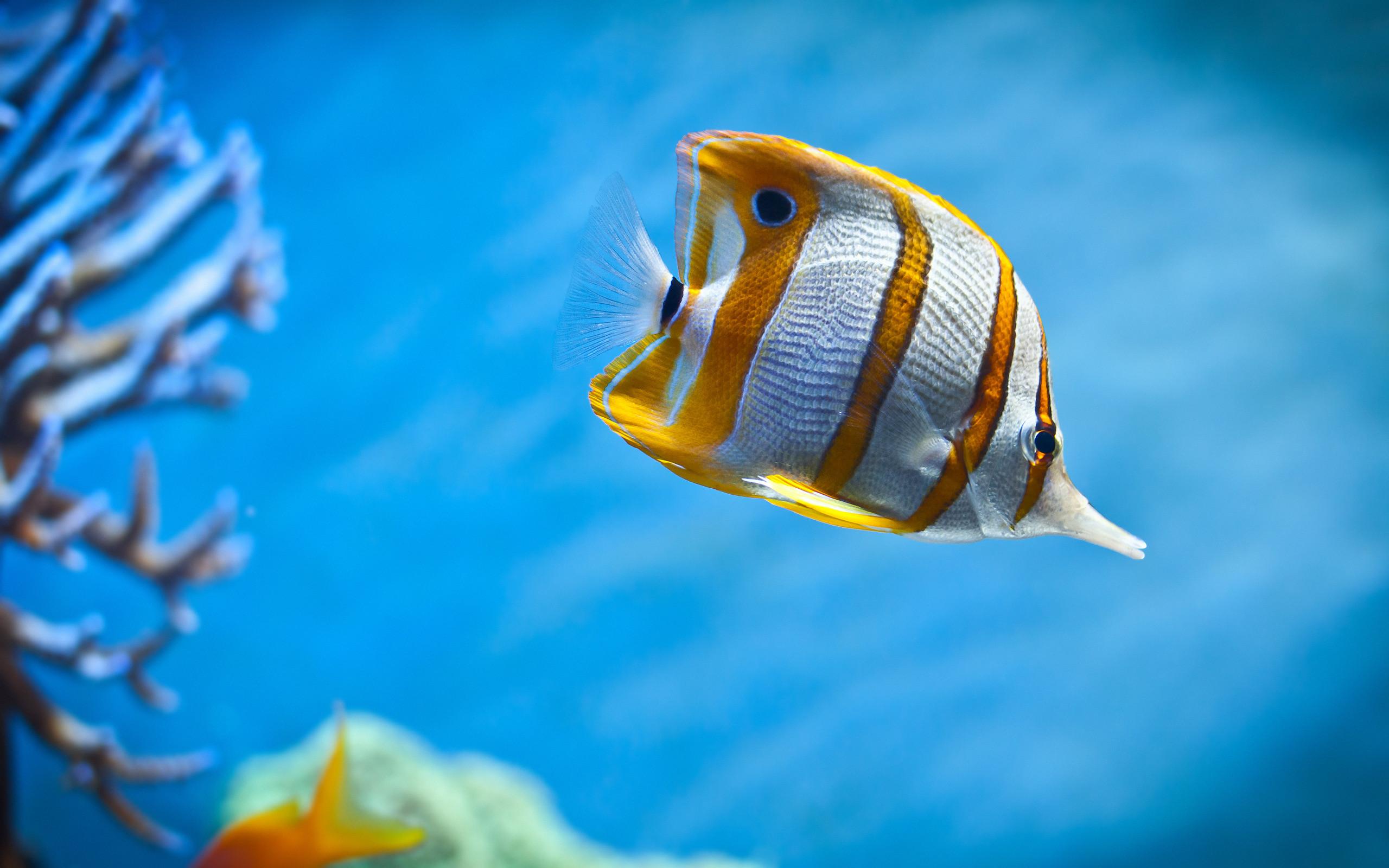 Saltwater Fish Wallpaper 58 Images