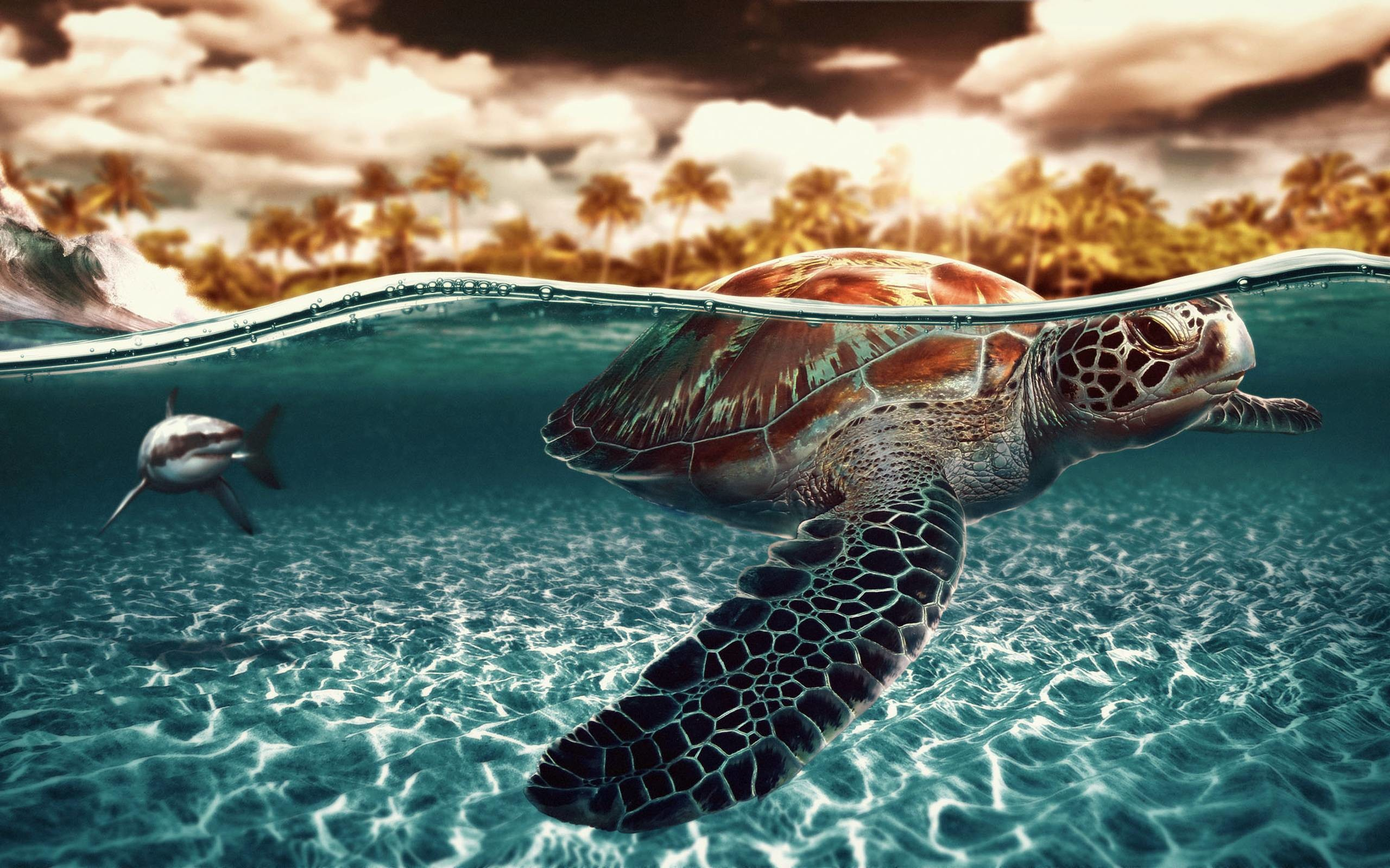 2560x1600 Wallpapers For > Nemo Sea Turtle Wallpaper