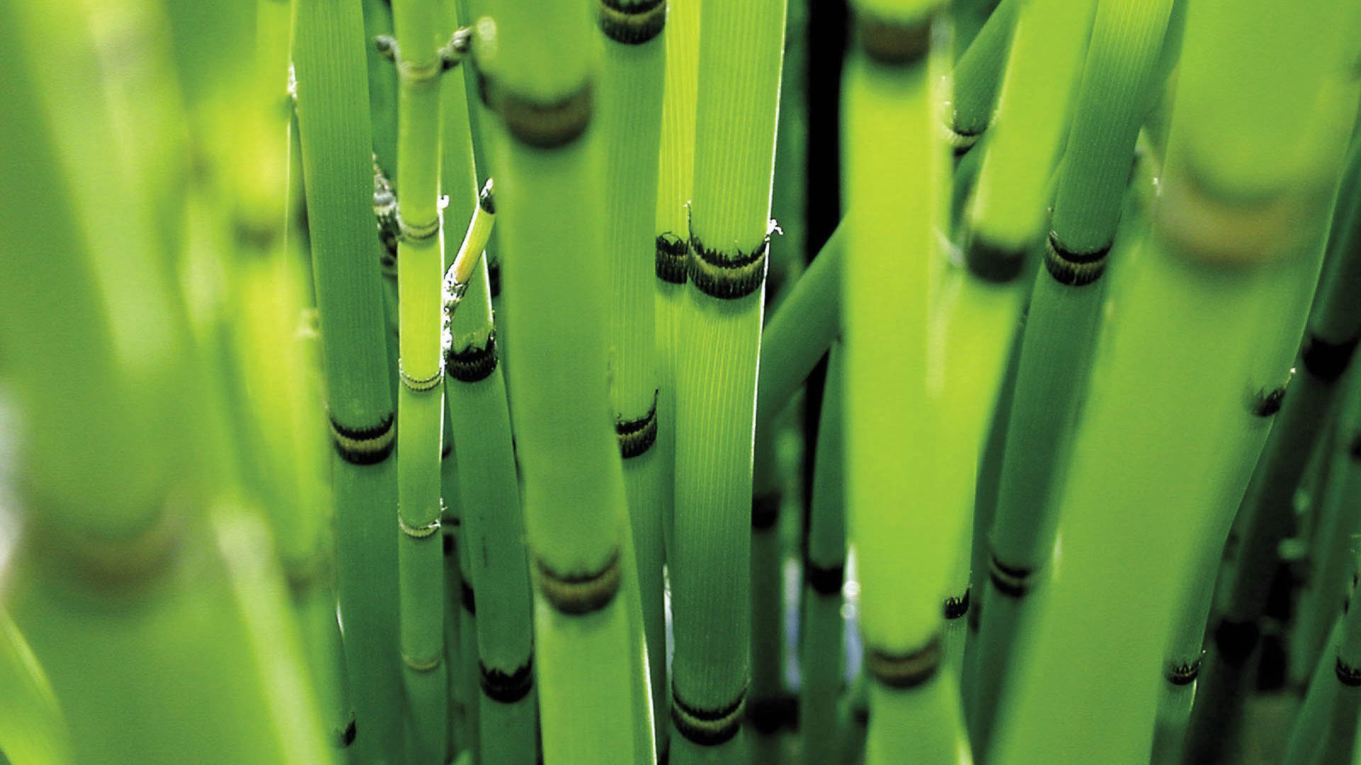 1920x1080 hd pics photos green bamboo nature attractive desktop background wallpaper