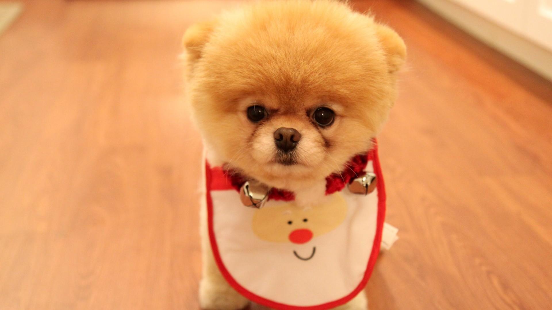 Download Wallpaper Halloween Puppy - 911186-christmas-puppies-wallpaper-1920x1080-for-tablet  Trends_1009633.jpg
