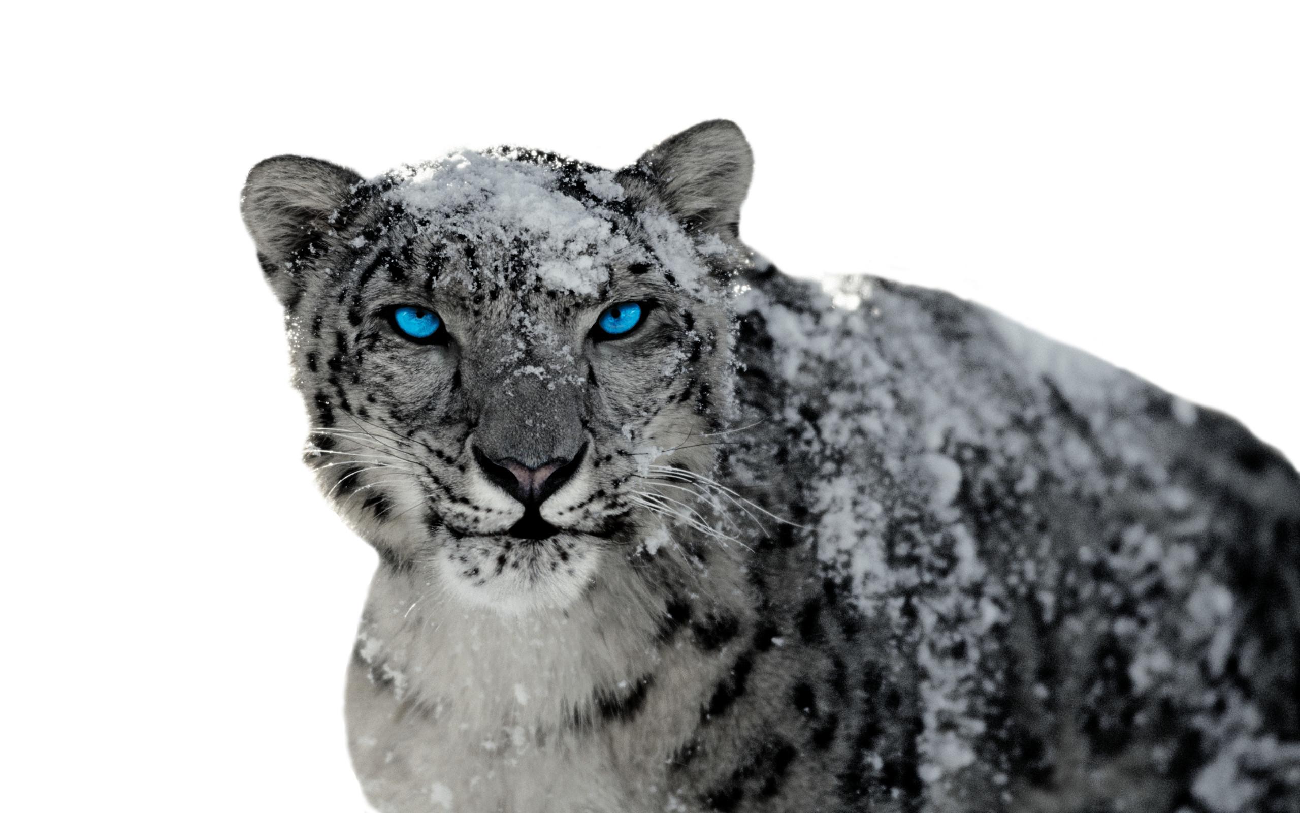 Mac Wallpaper Snow Leopard (64+ Images
