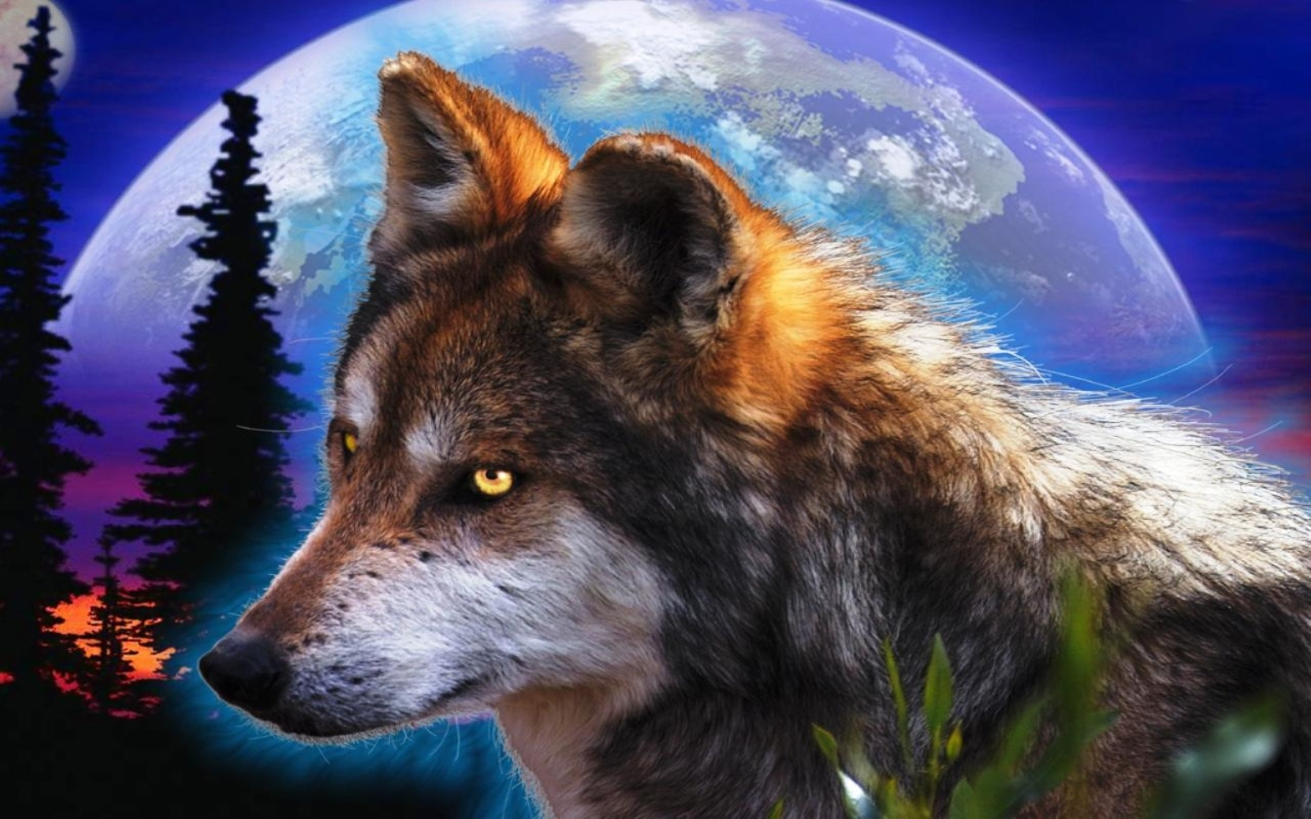 Husky Frases: Indian And Wolf Wallpaper Images (64+ Images