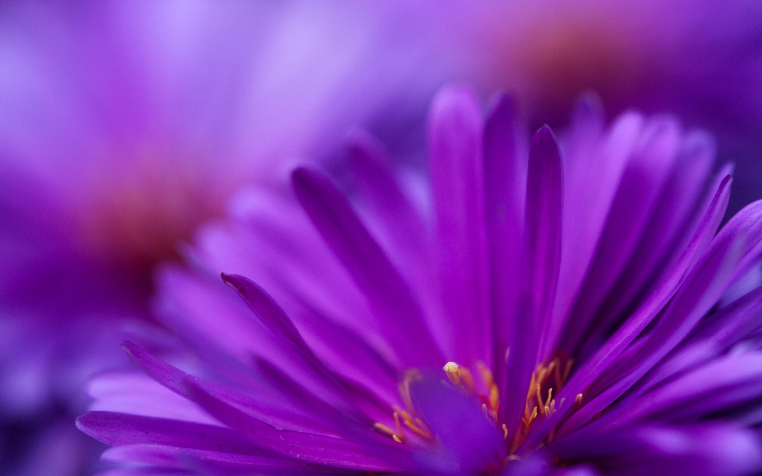 Purple Flowers Wallpaper Iphone Flowers Healthy