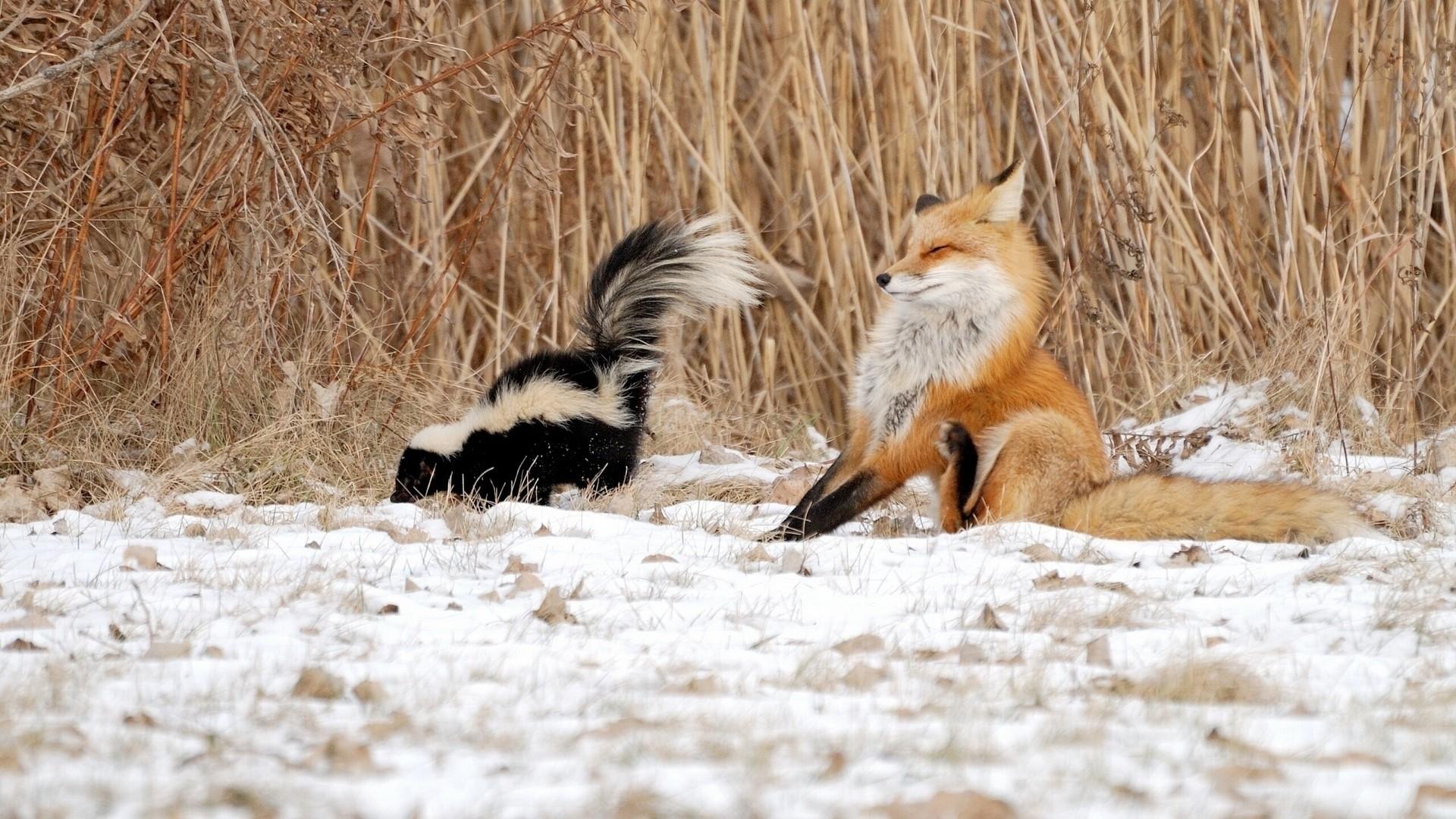animal winter desktop wallpaper (59+ images)