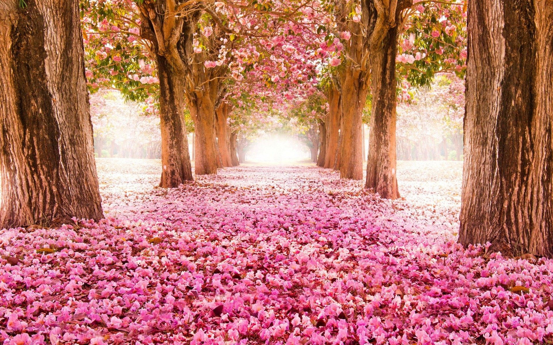 Desktop wallpaper spring flowers 60 images 1920x1200 pink blossom flowers spring tree hd wallpaper desktop wallpapers high definition monitor download free amazing mightylinksfo