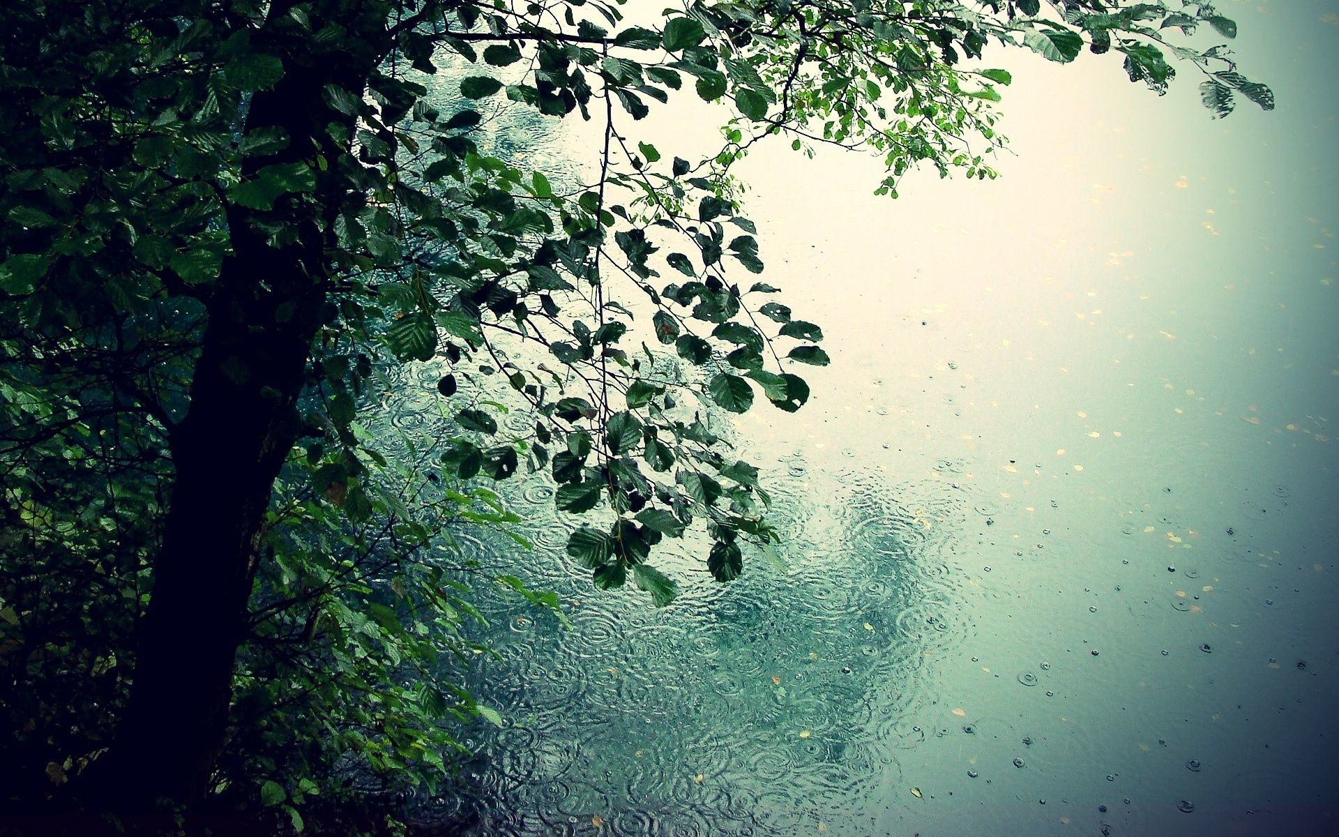 1920x1200 Spring Rain Wallpapers Background Natures Wallpapers Pinterest