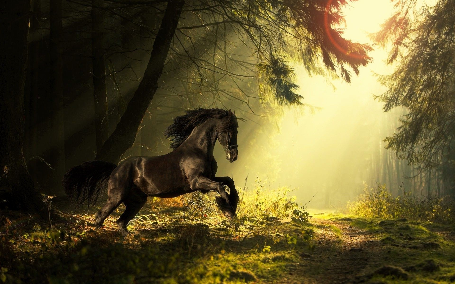 1920x1200 0 Horse Wallpapers Image Horse Wallpapers PC Desktop Full HD Pictures