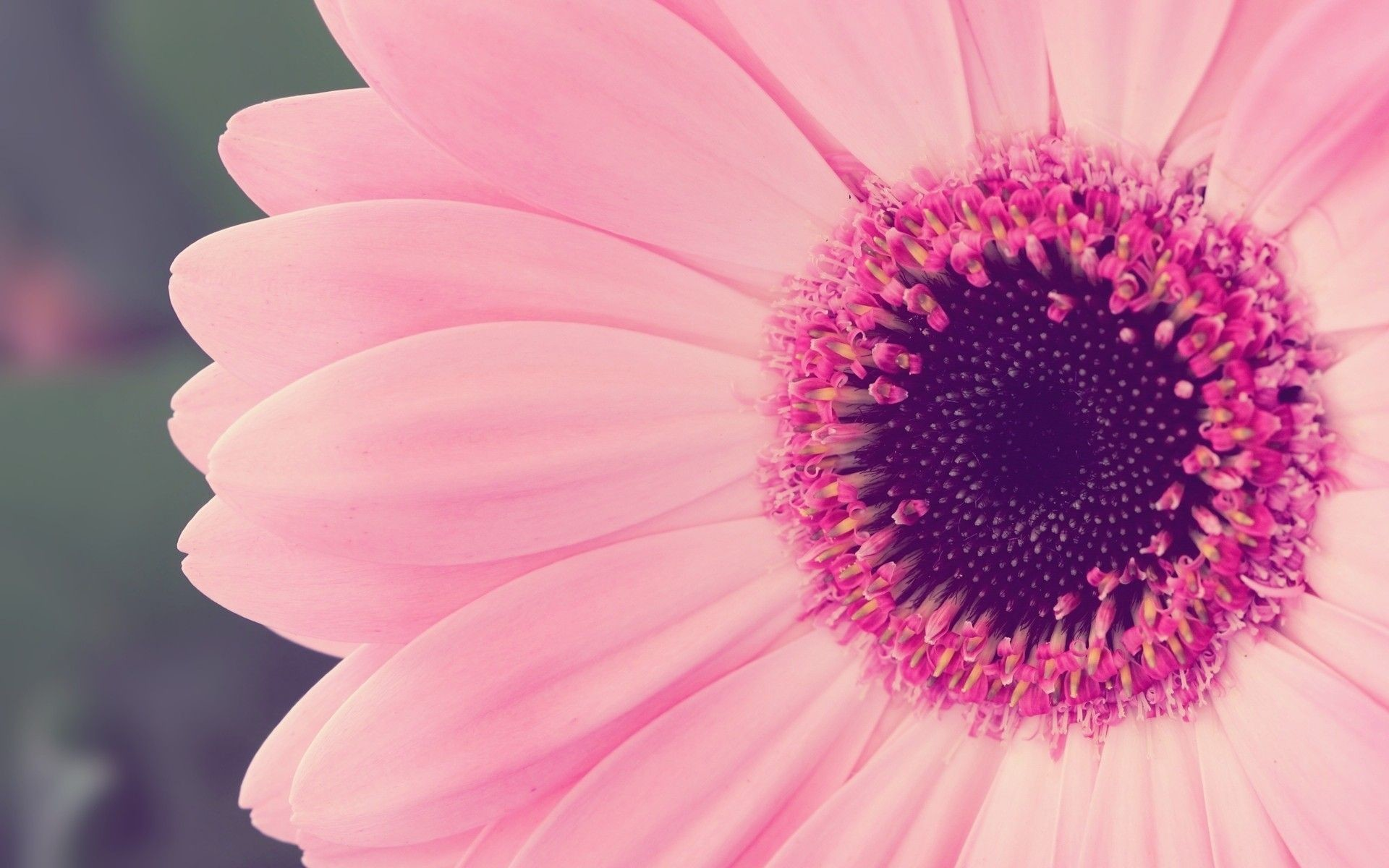 Pink Flower Wallpaper Laptop
