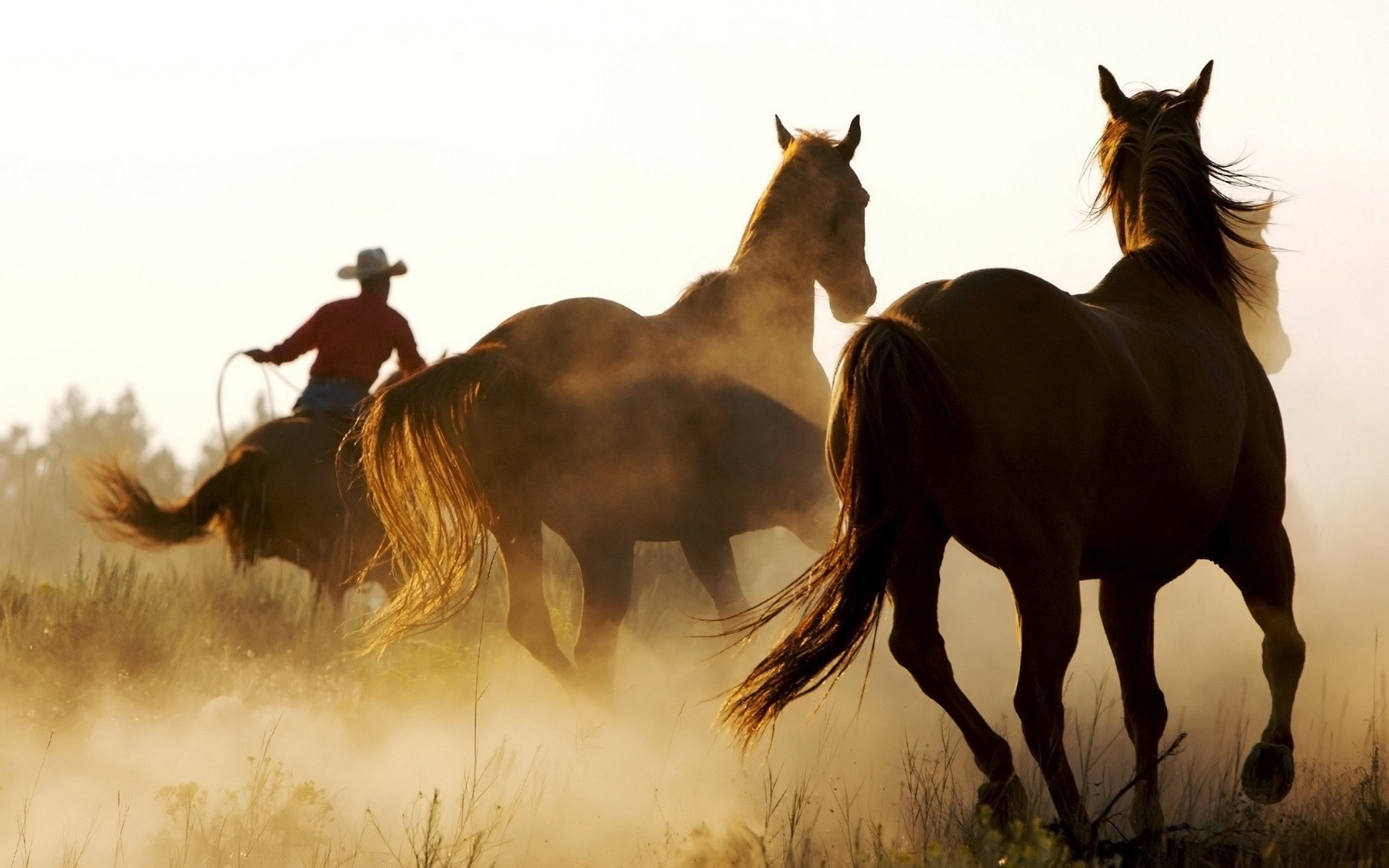 1920x1200 western backgrounds | Download Western Romance wallpaper 40197 .