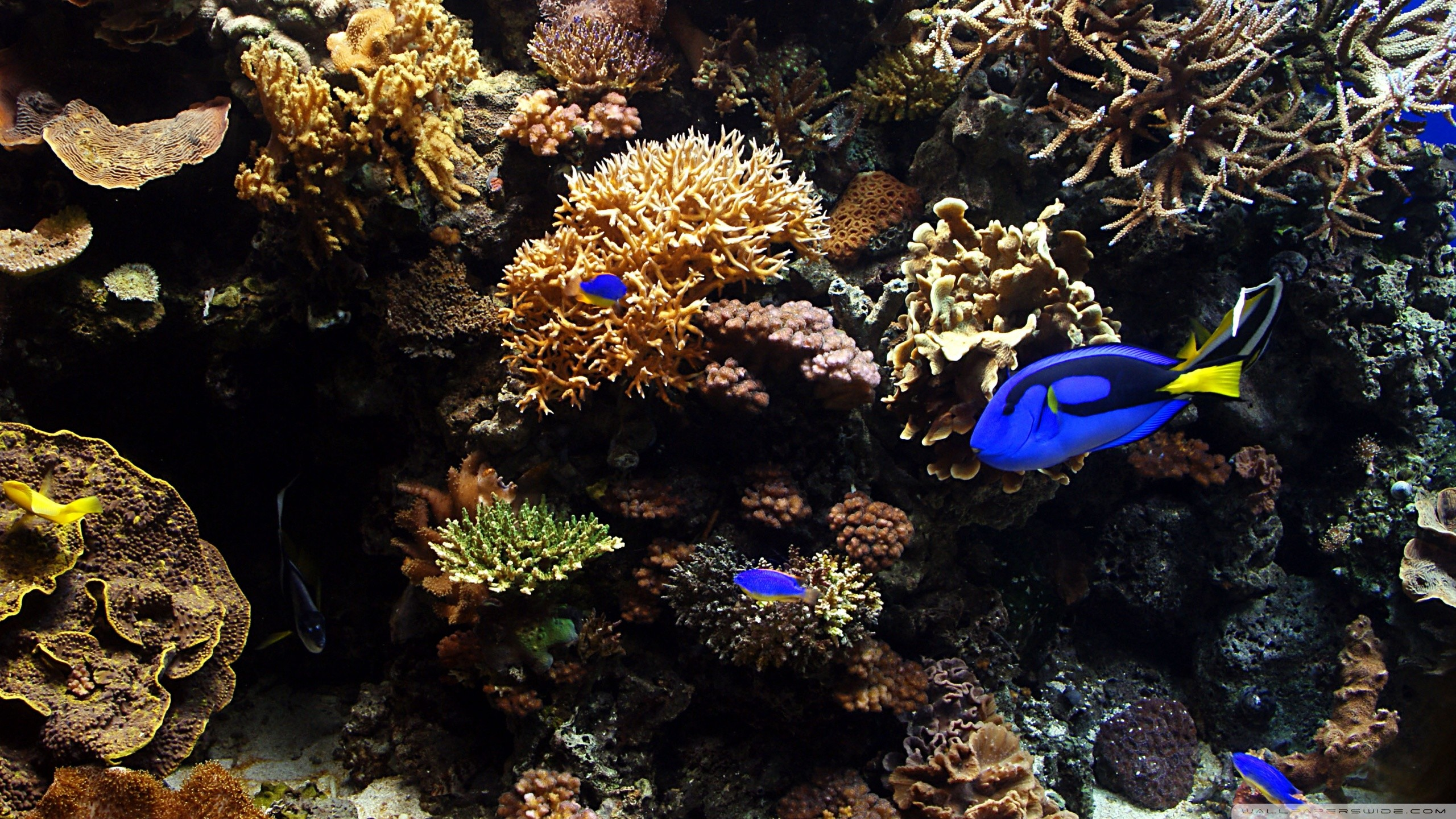 Aquarium live wallpaper for pc 55 images for Desktop fish tank