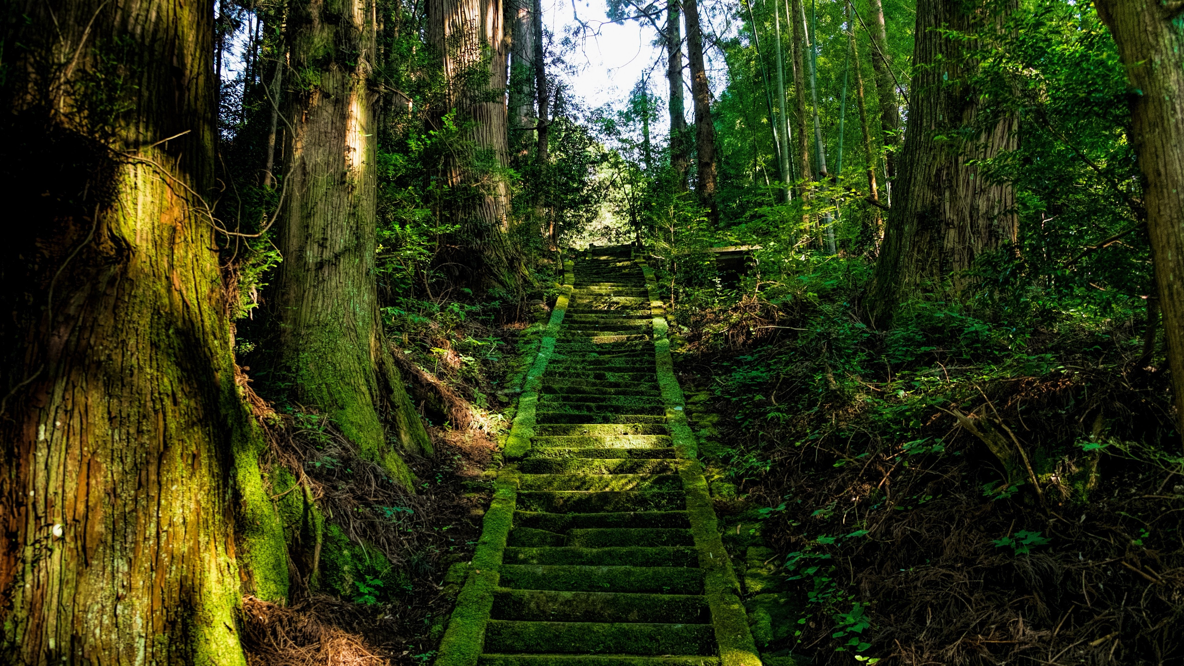 3840x2160  Wallpaper stairs, moss, trees, japan
