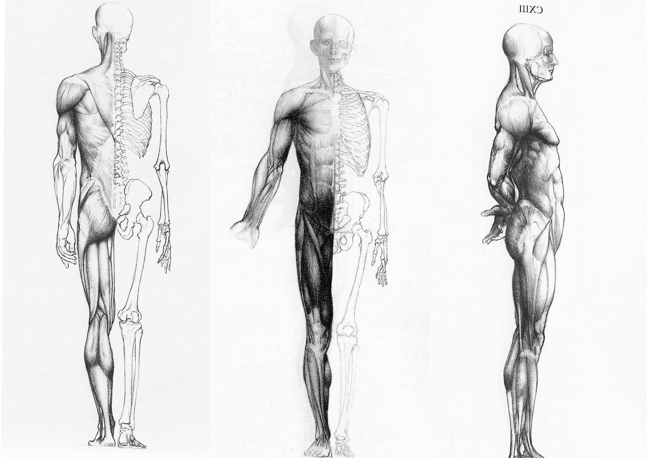 Anatomy Wallpaper HD (63+ images)