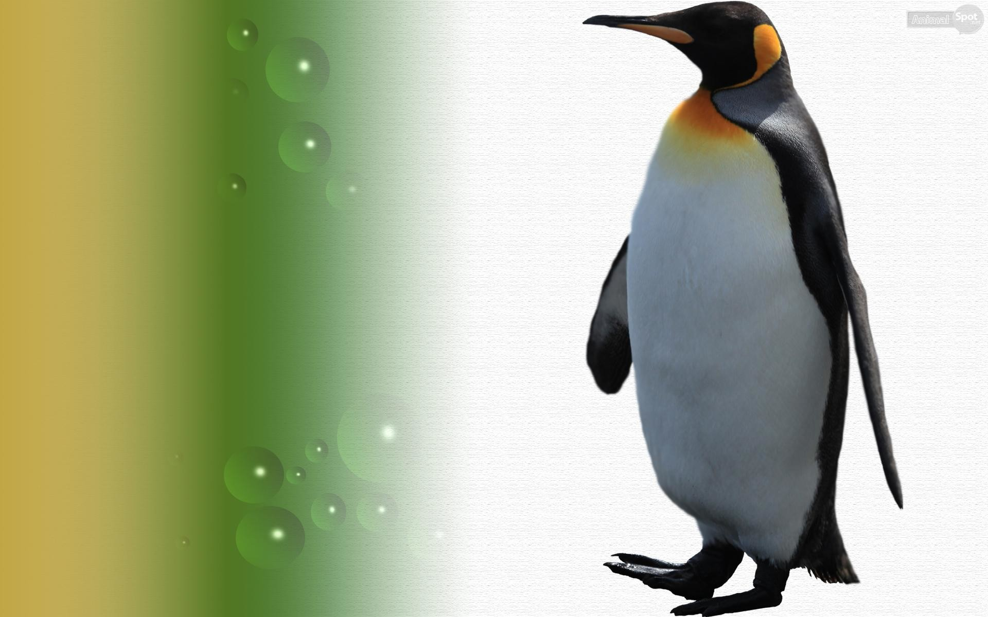1920x1200 More wallpaper collections. 31 Wallpapers. cute penguin wallpaper
