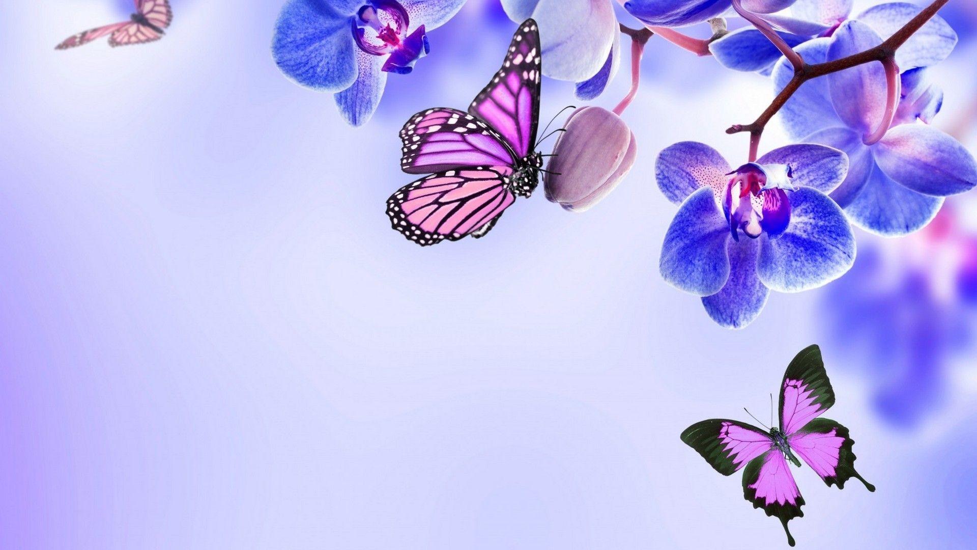 Purple Butterfly Desktop Wallpaper 78 Images