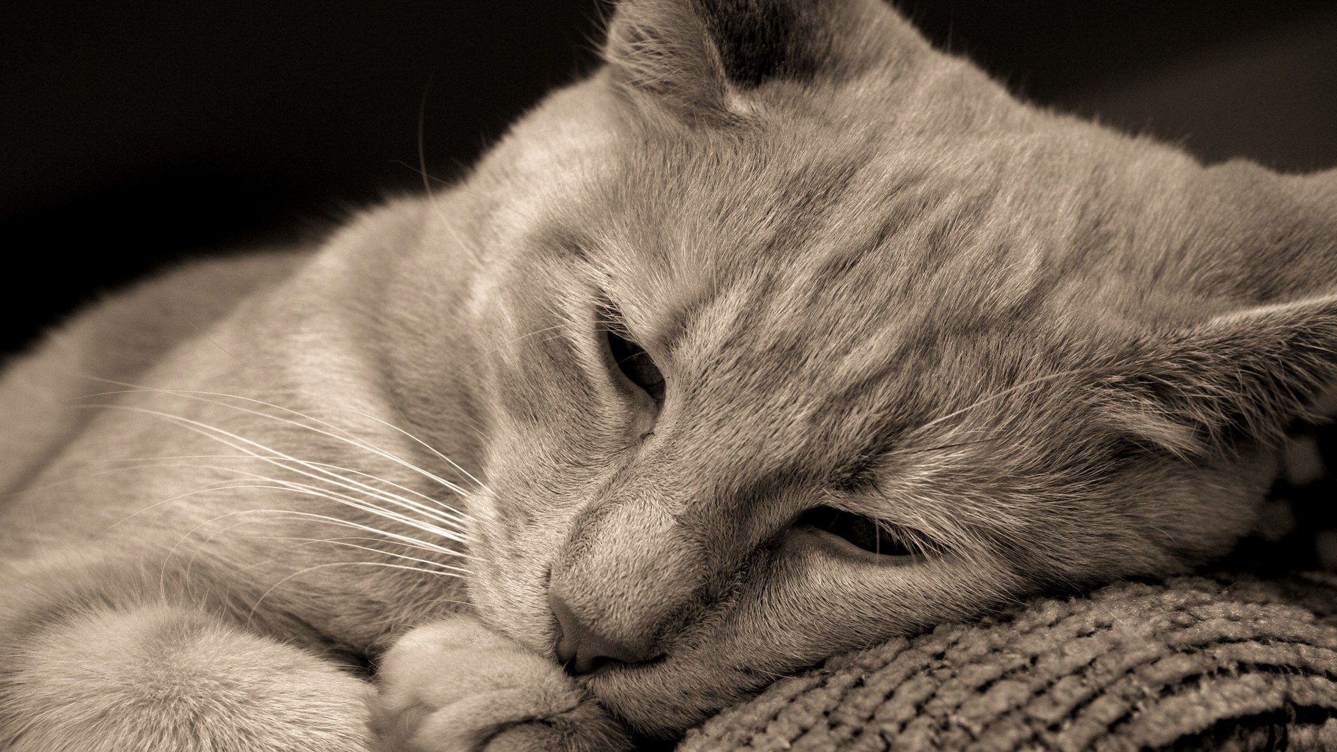 Cat Hd Wallpapers 1080p 64 Images