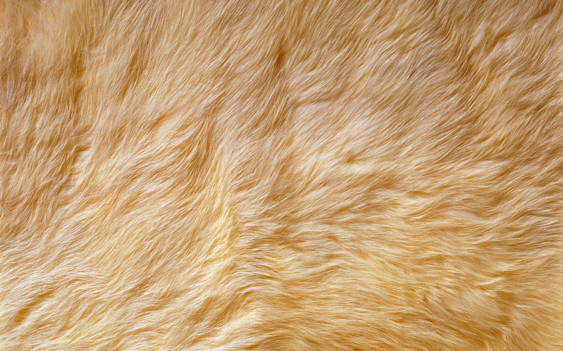 1920x1200 Light Brown Fur Background Pattern