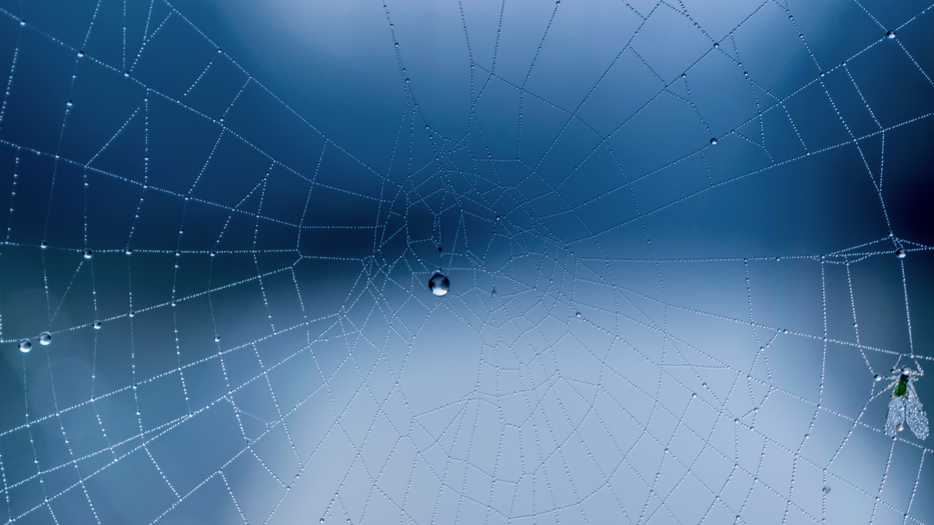 3840x2160  Wallpaper spider web, close-up, drops