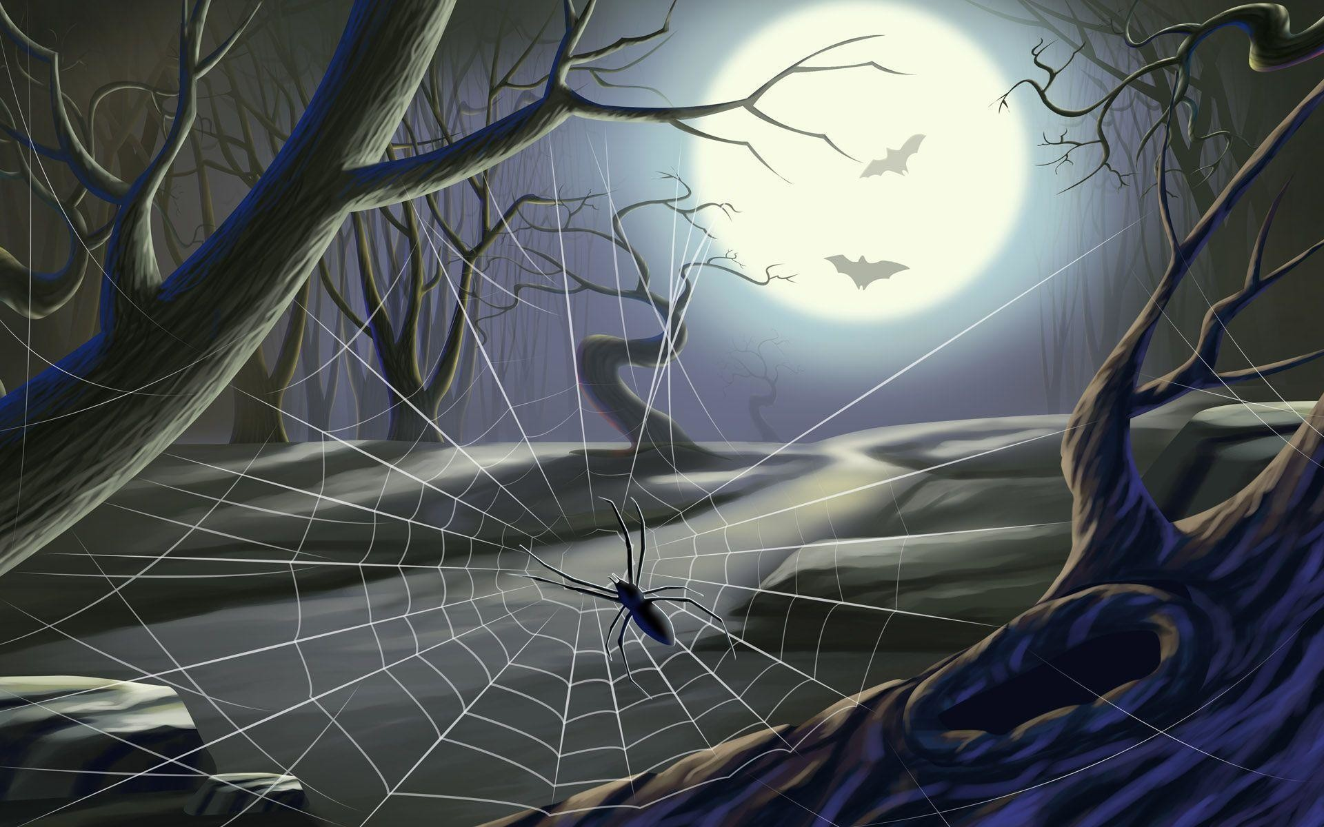 1920x1200 Spider on a Spider Web Wallpapers - HD Wallpapers Inn