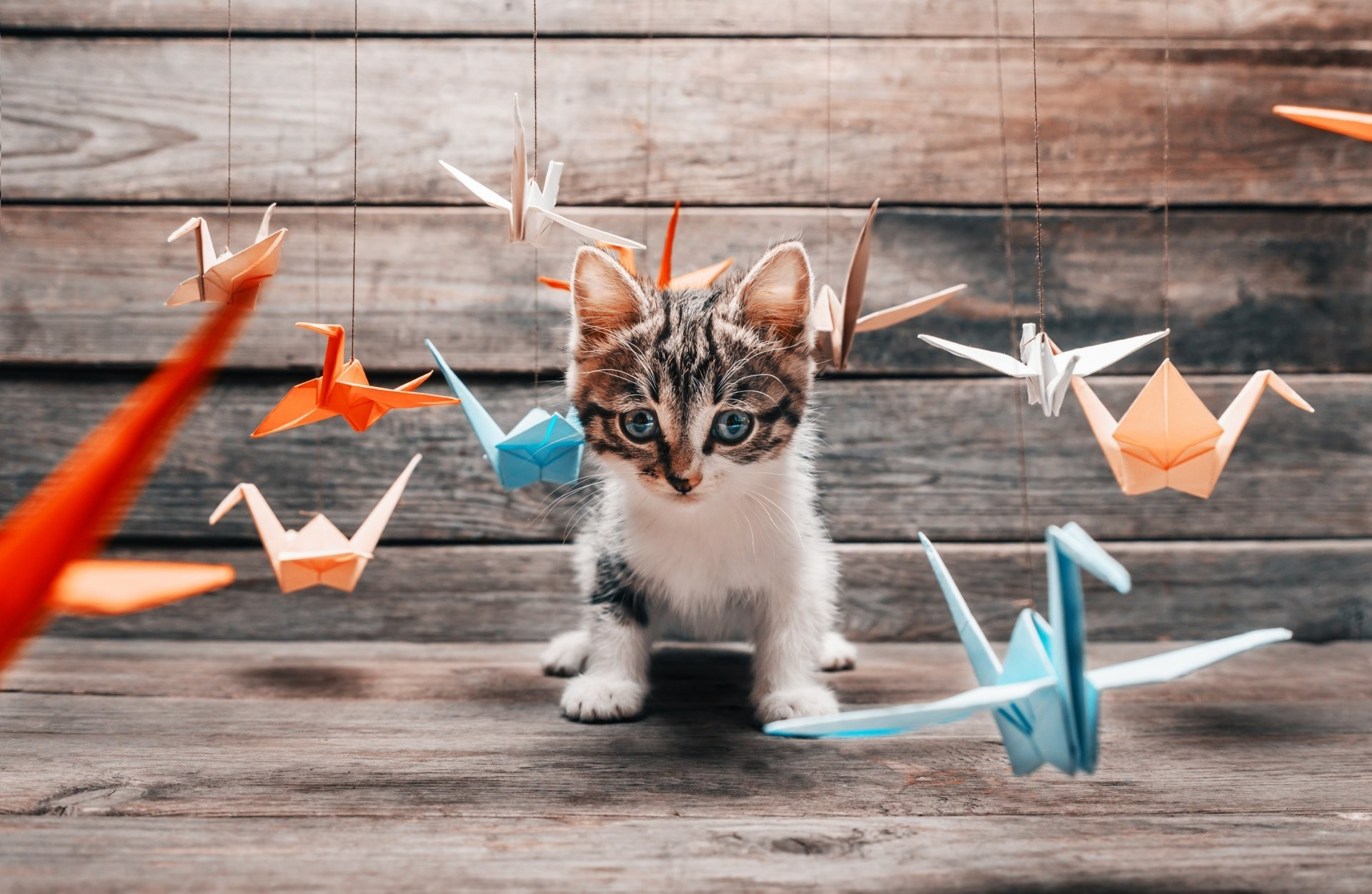 1920x1252 cat kotyara mustache feet tail furry position hunter training game colored  summer beautiful paper origami crane