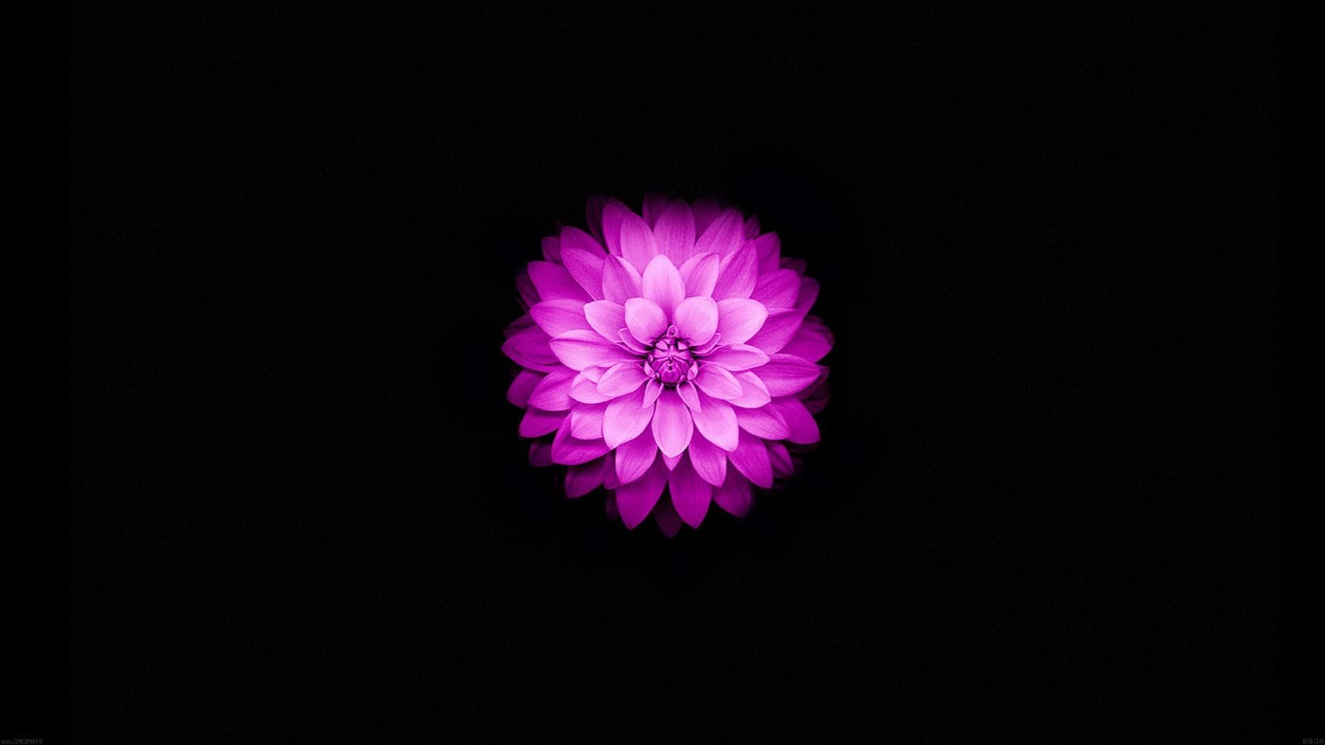 Flowers on Black Background Wallpaper (77+ images)