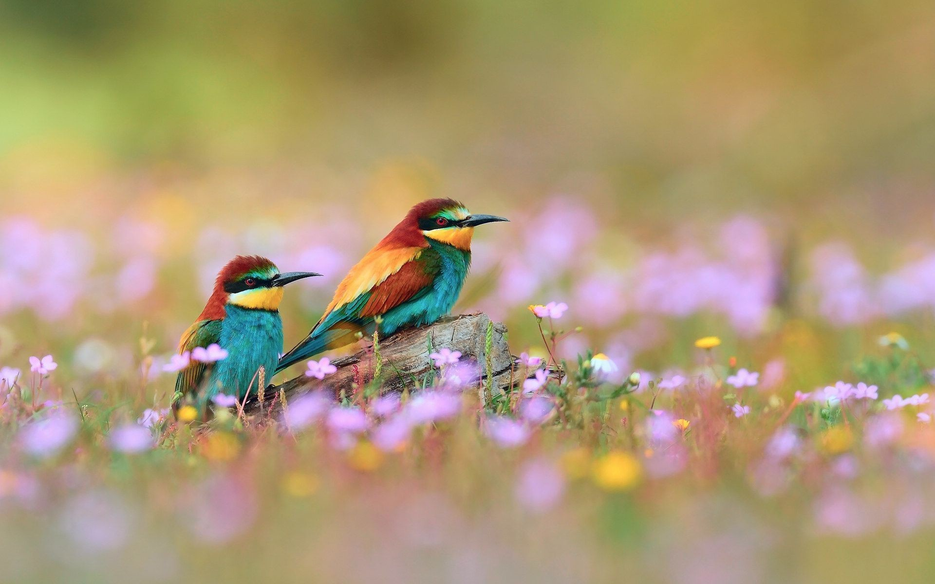 1920x1200 Spring Flowers And Birds Wallpaper Pictures 5 HD Wallpapers