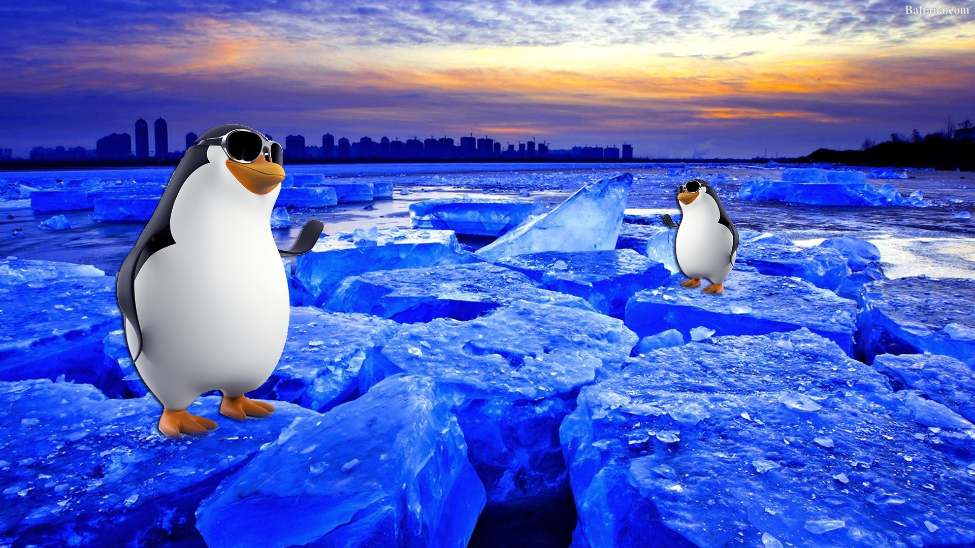 1920x1080 Penguin HD Desktop Wallpaper 31699