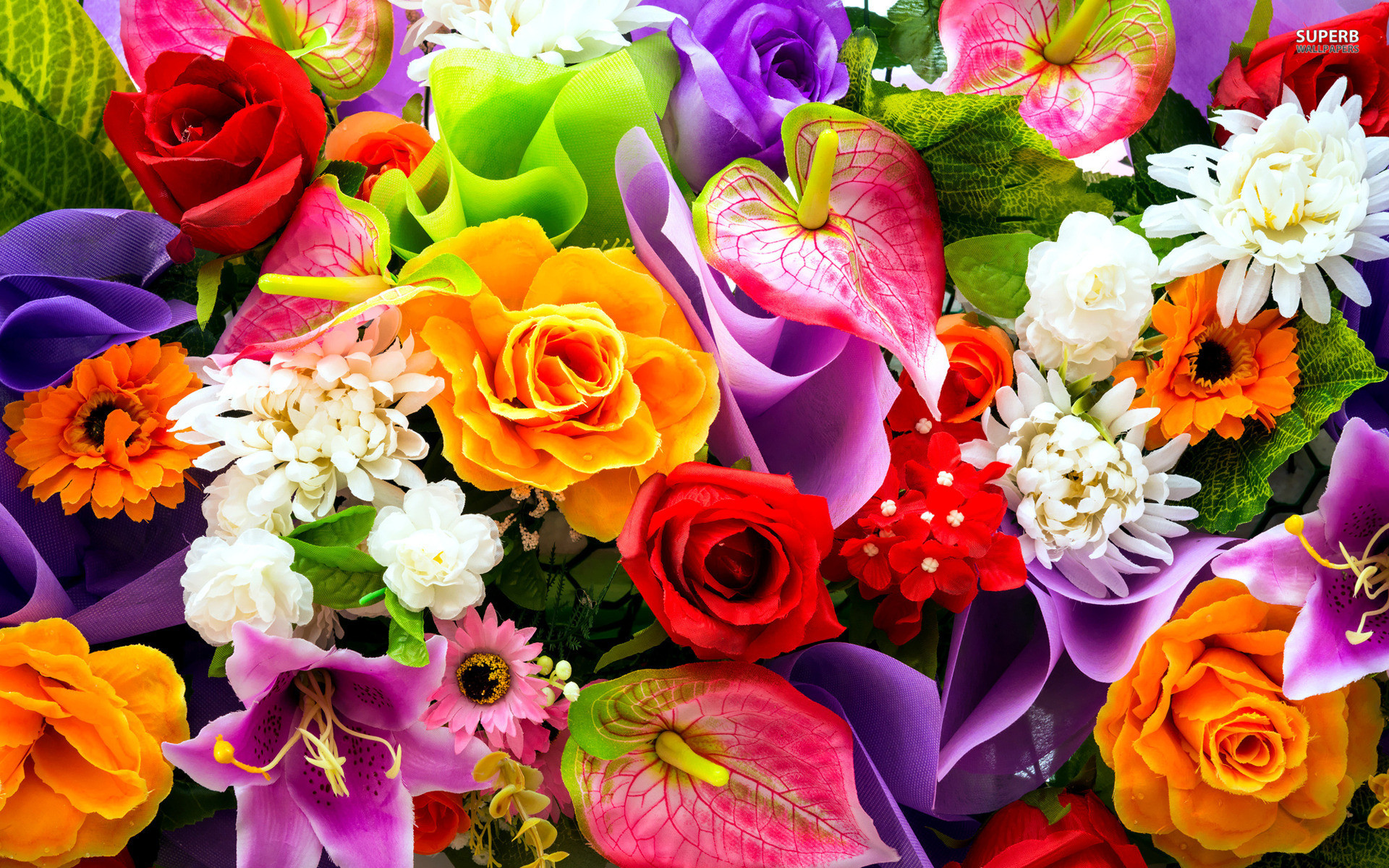 1920x1200 Colorful Flowers Wallpapers - HD Images New