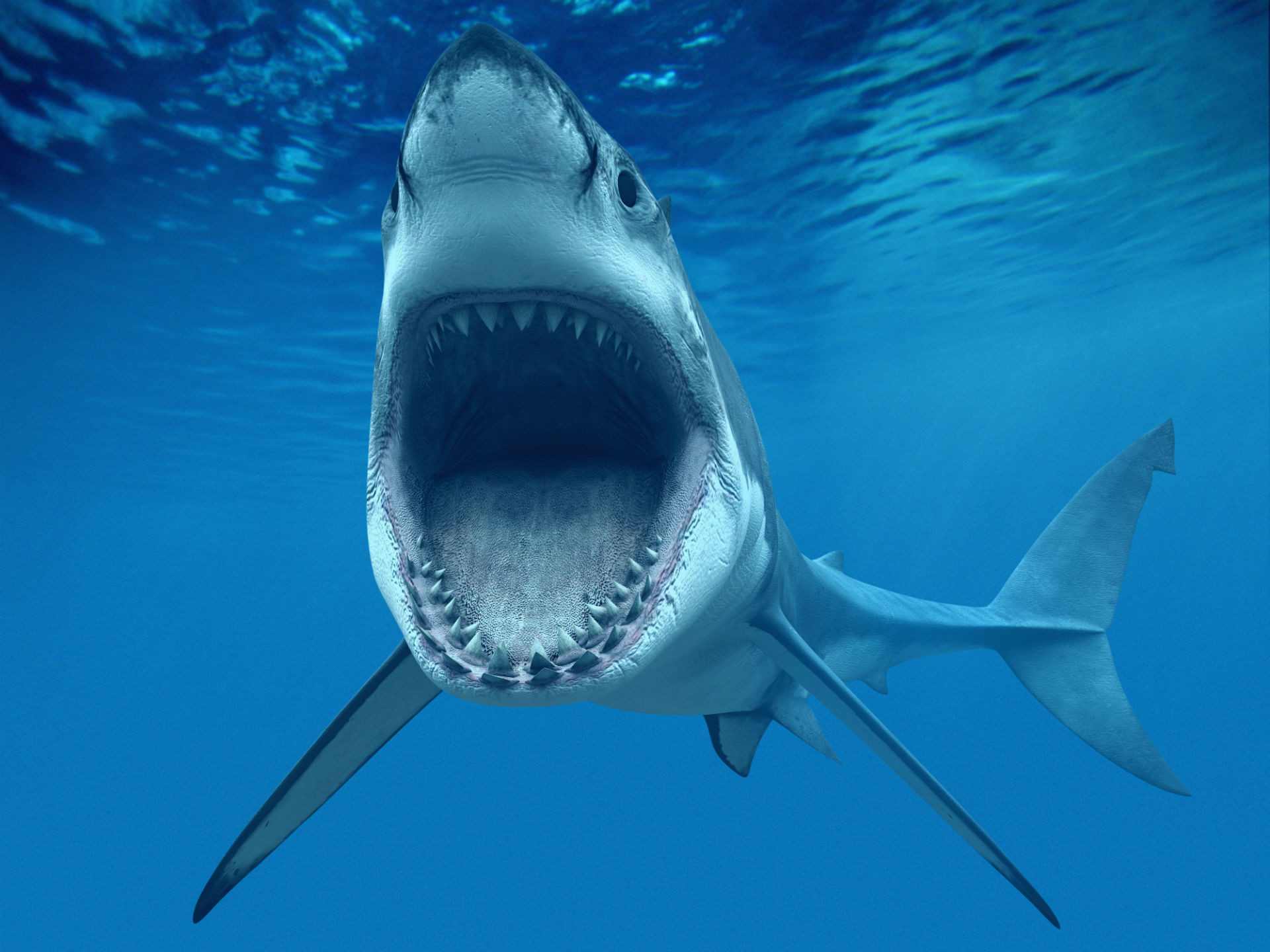 1920x1440 Shark Fish Great WhiteTeeth Underwater Blue Ocean CG wallpaper .
