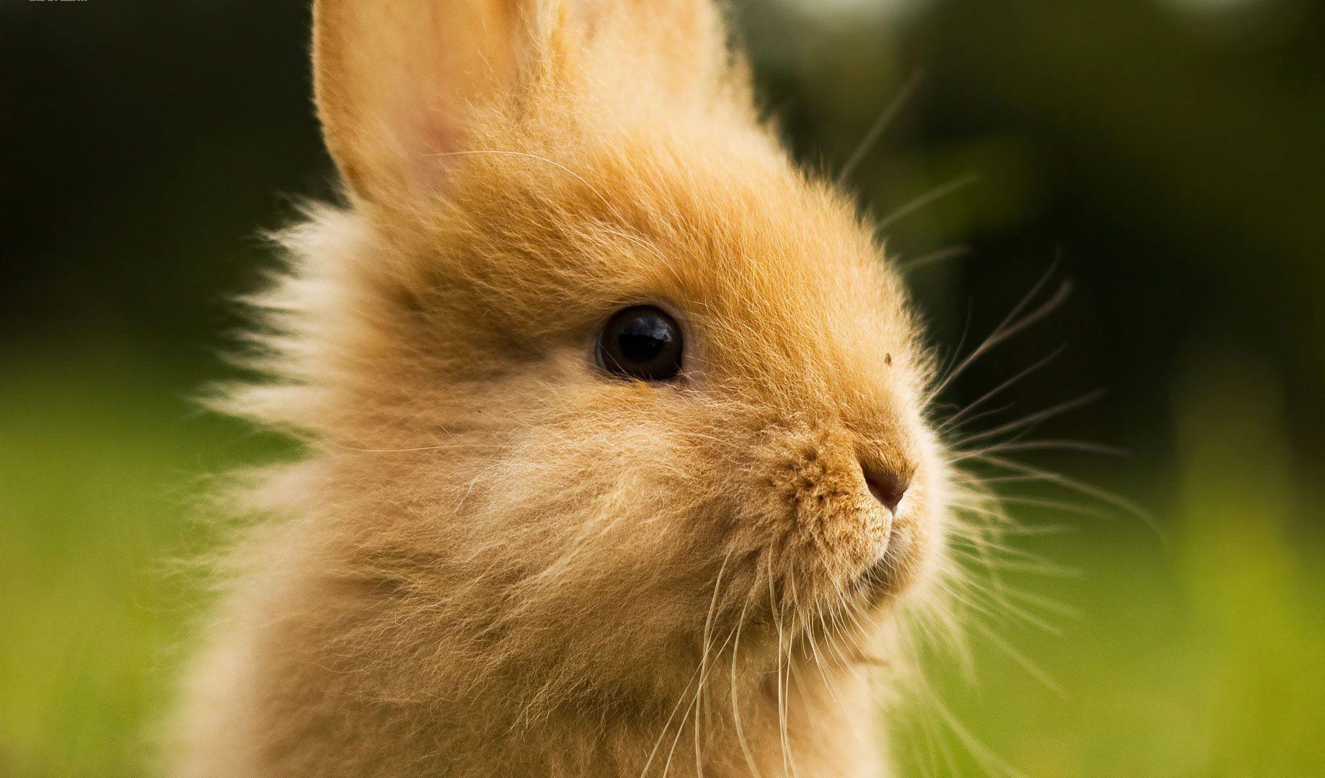 Cute White Rabbit Wallpapers For Desktop: Cute Bunnies Wallpaper (65+ Images
