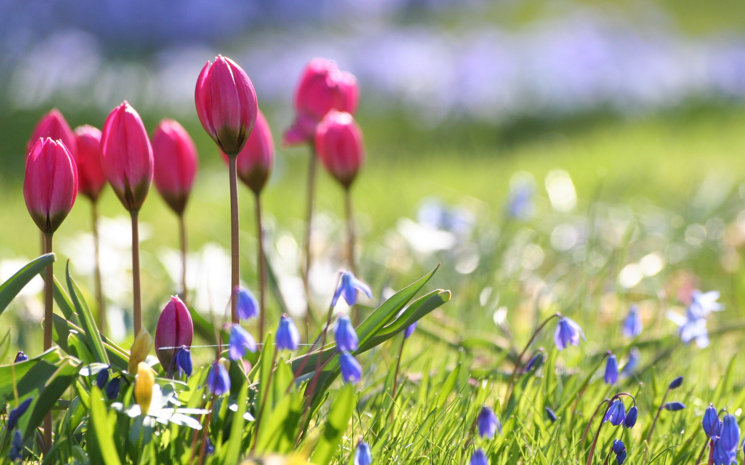 2560x1600 Spring Flower Screensavers #1