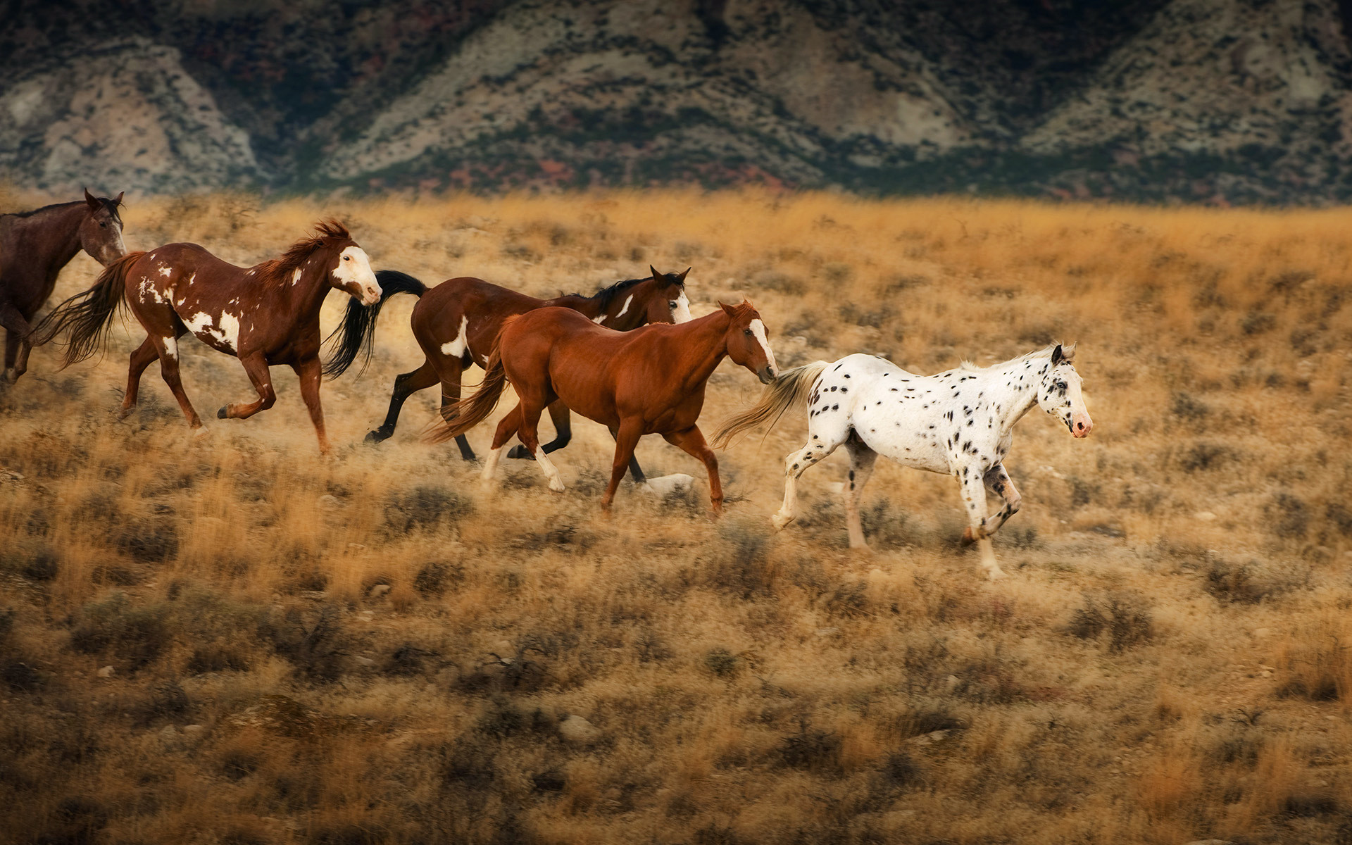 1920x1200 Wild horses in Wyoming. HD Wallpaper and background photos of Wild horses  in Wyoming for fans of Flicka & The Saddle Club images.