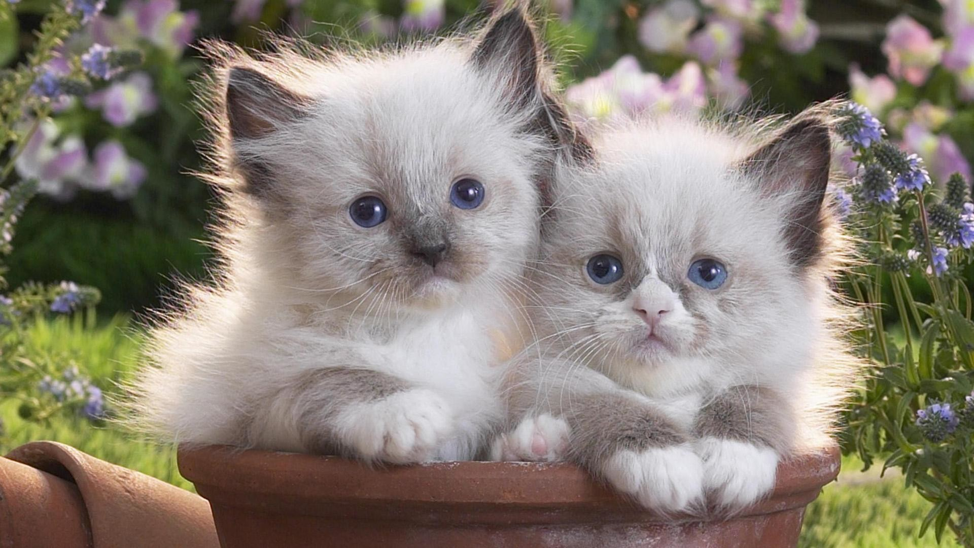1920x1080 10. cute-kitten-wallpaper10-600x338
