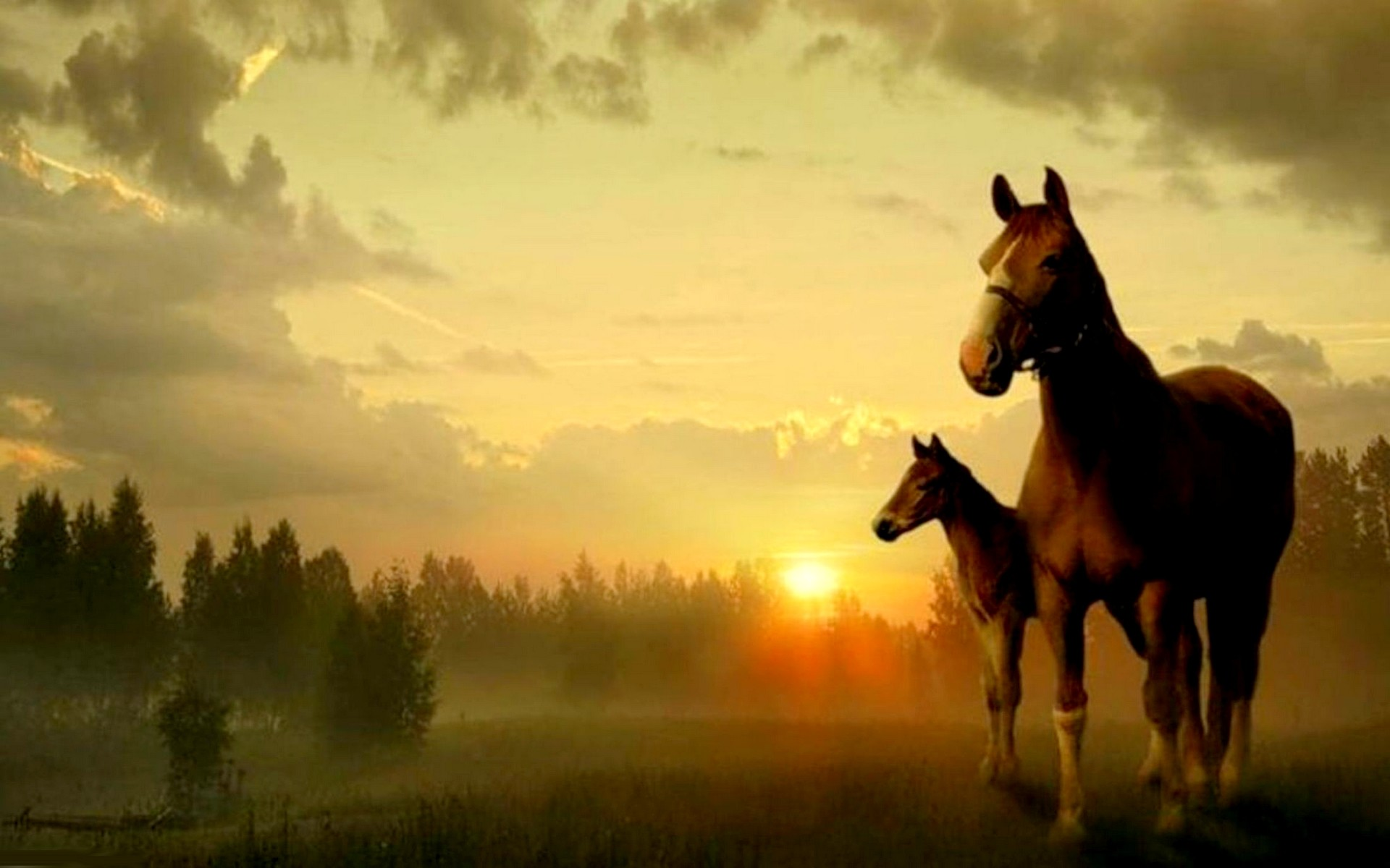 Horses wallpaper 58 images for Wallpaper mare hd