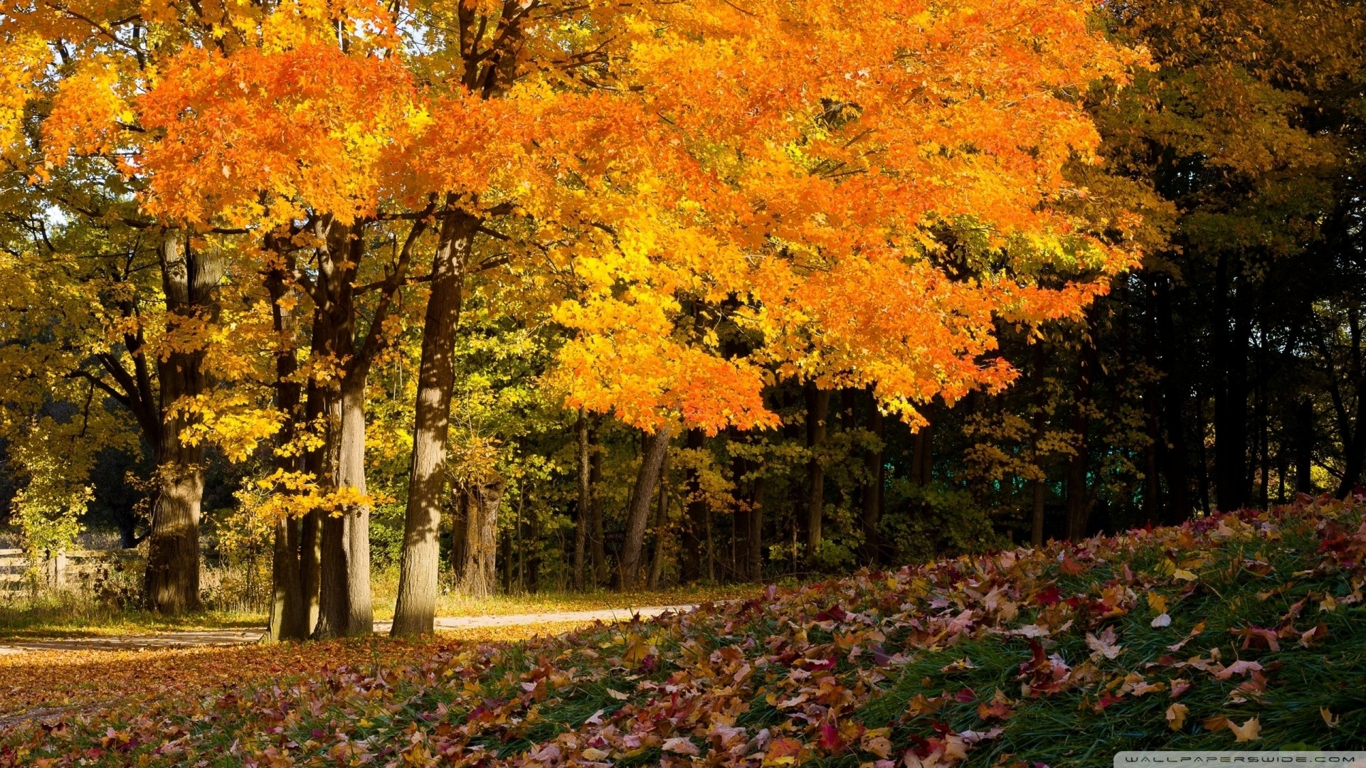 1920x1080 Fall Scene Wallpaper  Fall, Scene