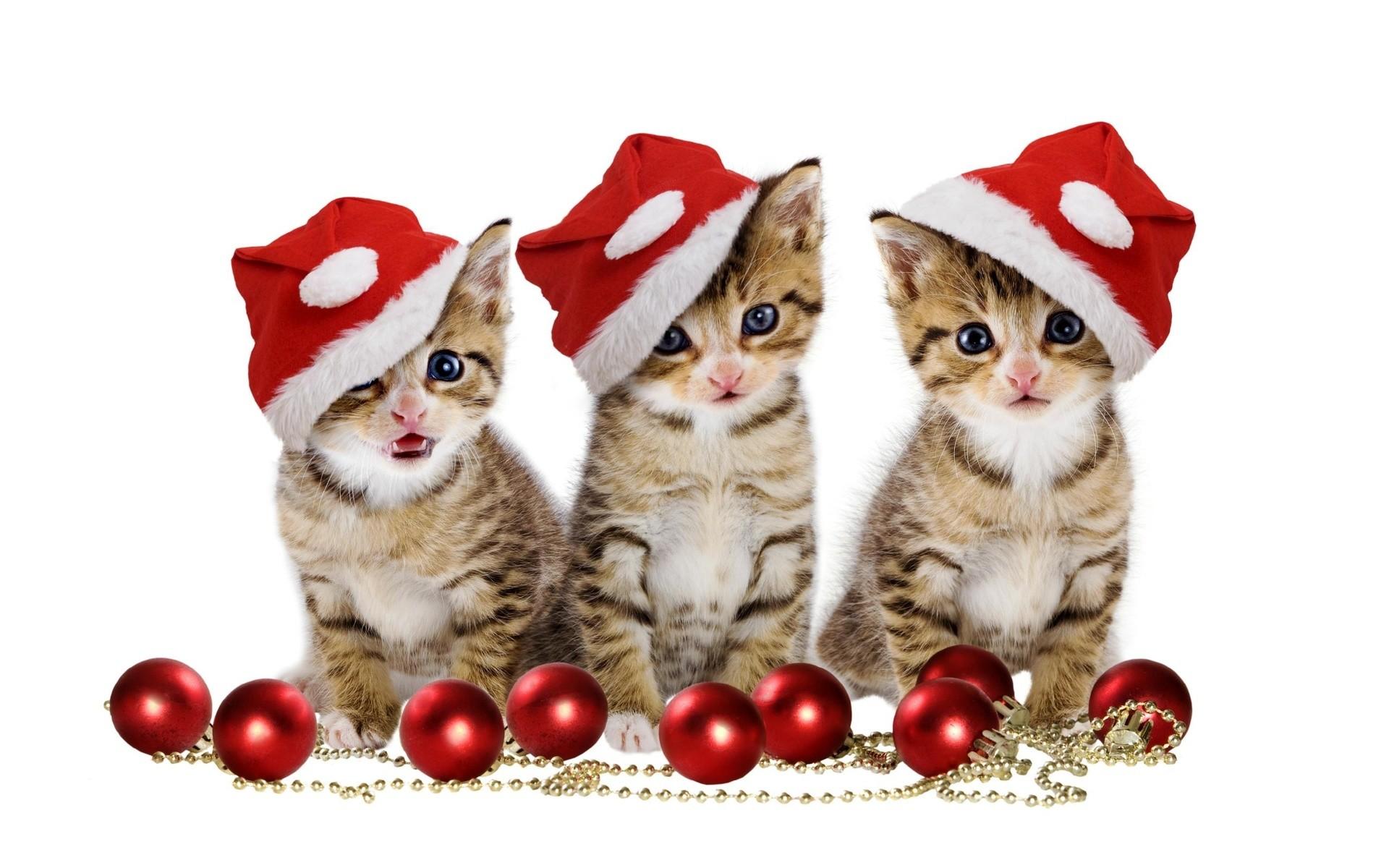 Cute Animal Christmas Wallpaper Cute Christmas Pets Puppy Ball