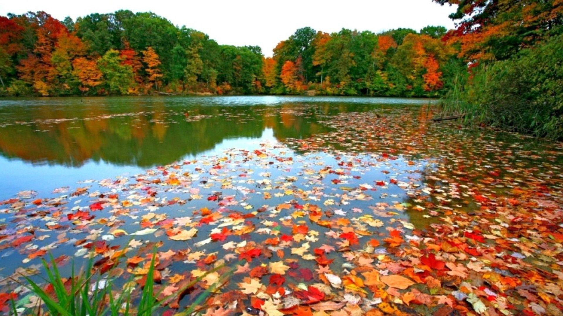 Autumn Wallpapers for Desktop (68+ images)