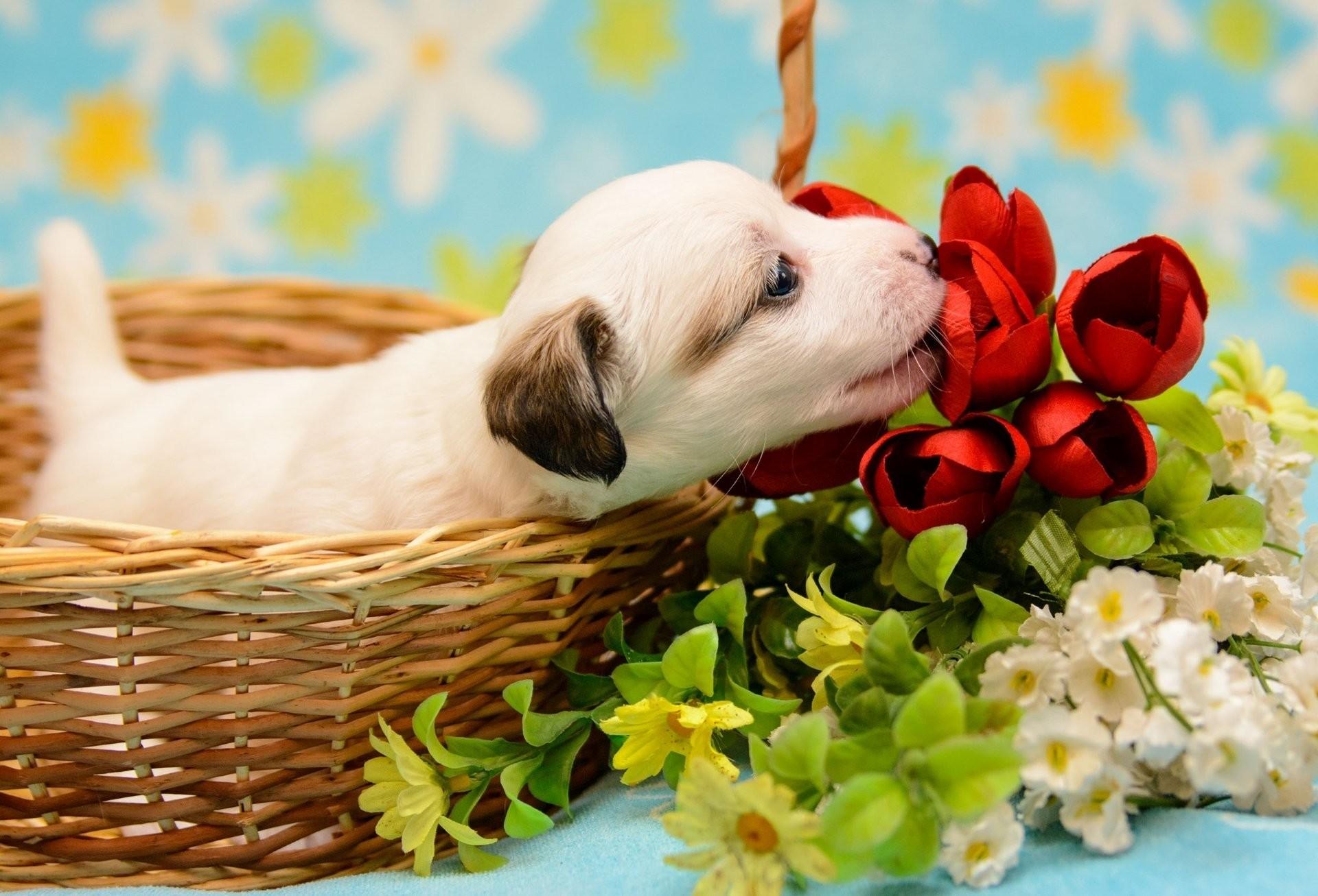 Puppy Valentine Wallpaper (56+ Images